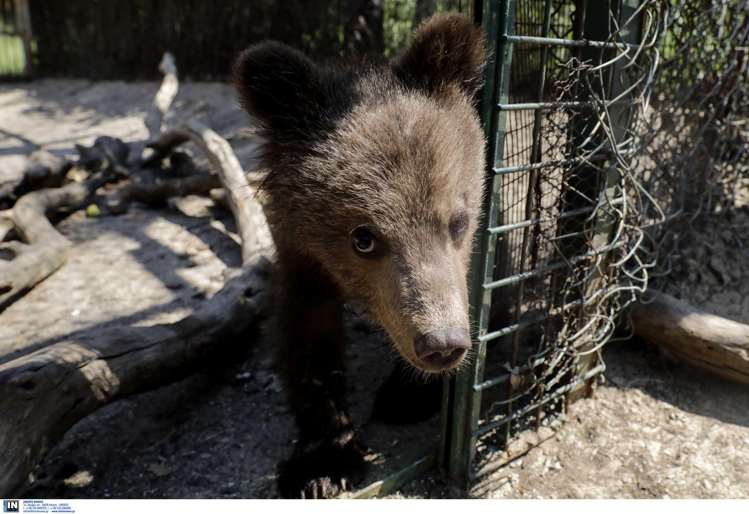 Λιχτενστάιν αρκούδα