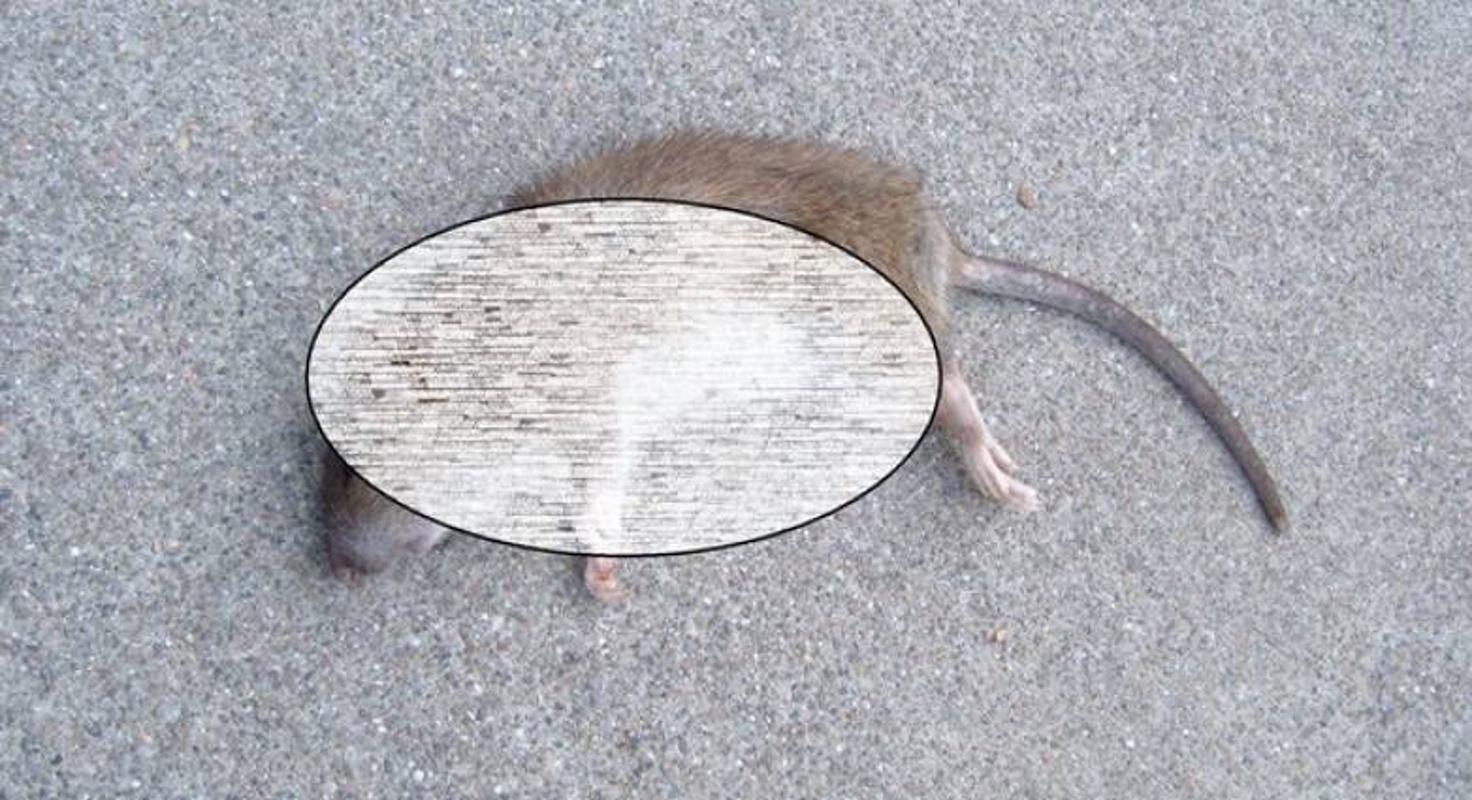 Πάτρα: Ληστές «μπουκάρουν» σε σπίτια με δόλωμα ψόφιο ποντίκι έξω από την πόρτα