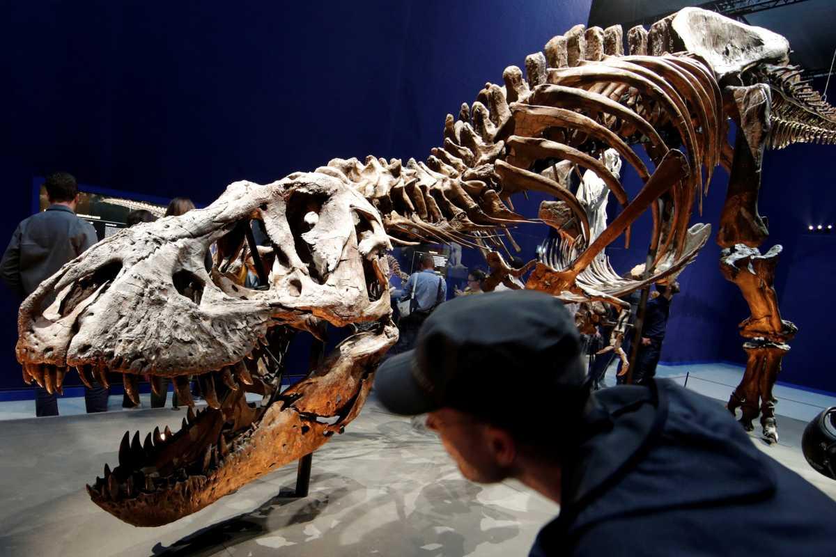 Οι δεινόσαυροι δεν είναι όσοι ξέραμε – Αναγνωρίστηκε νέο είδος