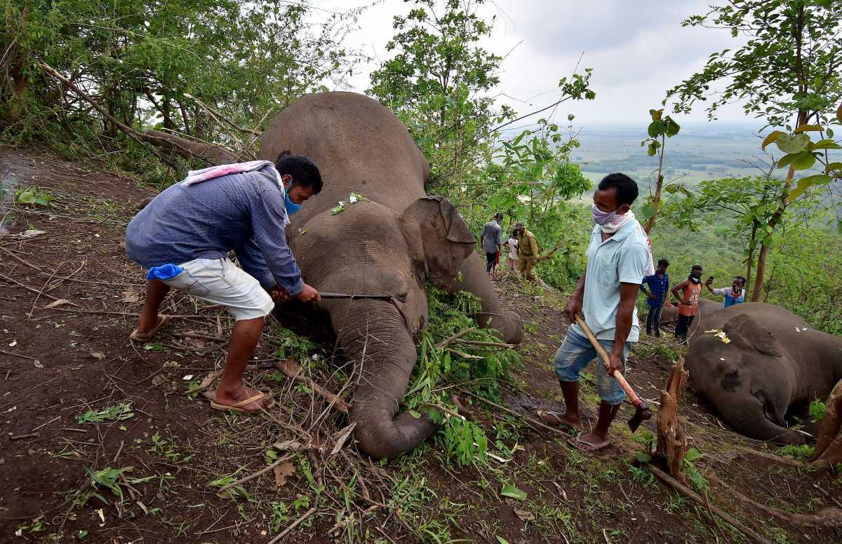 Κεραυνοί σκότωσαν 18 ελέφαντες!