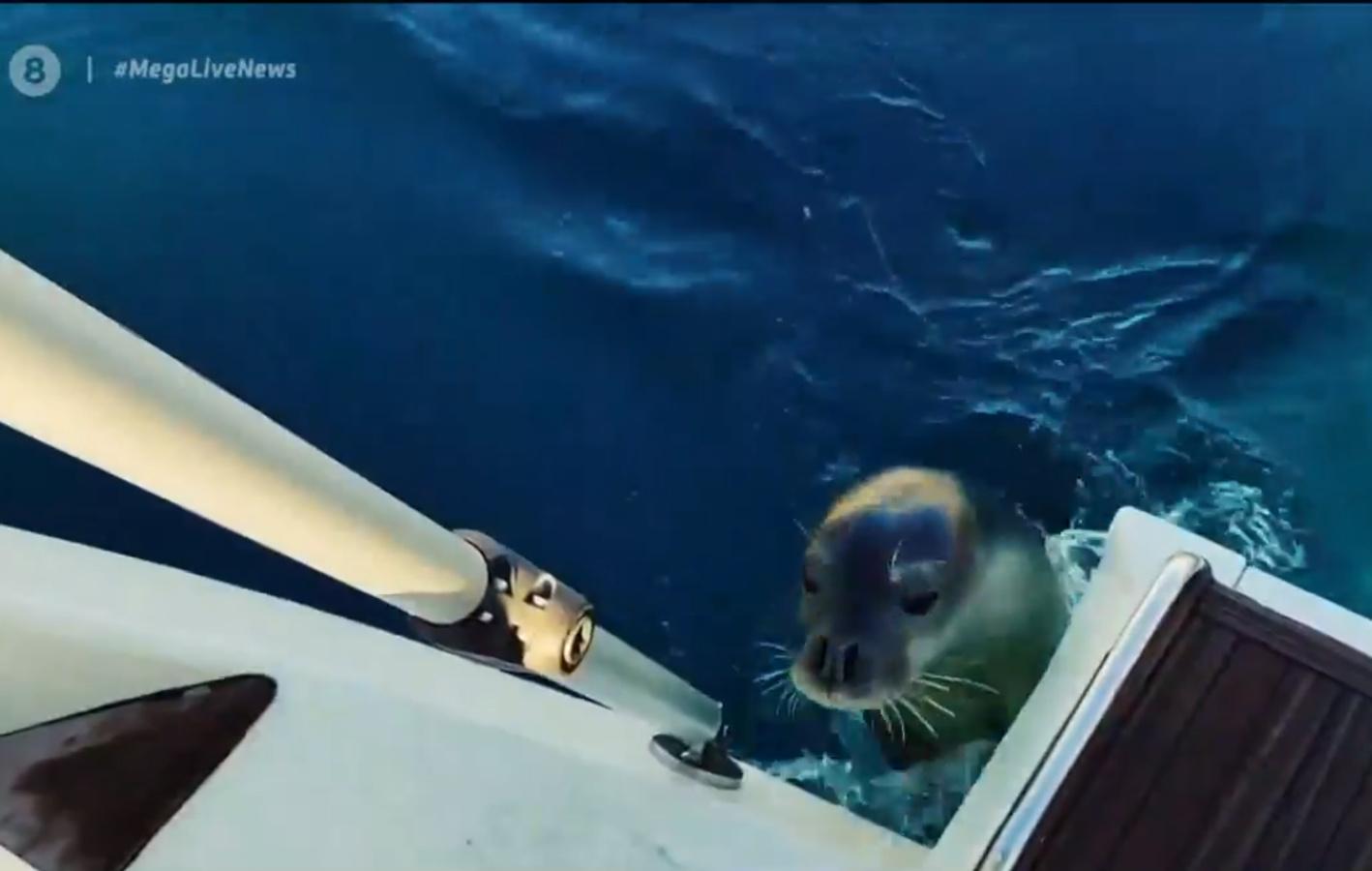 Αλόννησος: Αναστάτωση από την επίθεση φώκιας σε τουρίστρια – Σοκάρει η μαρτυρία της αδερφής της