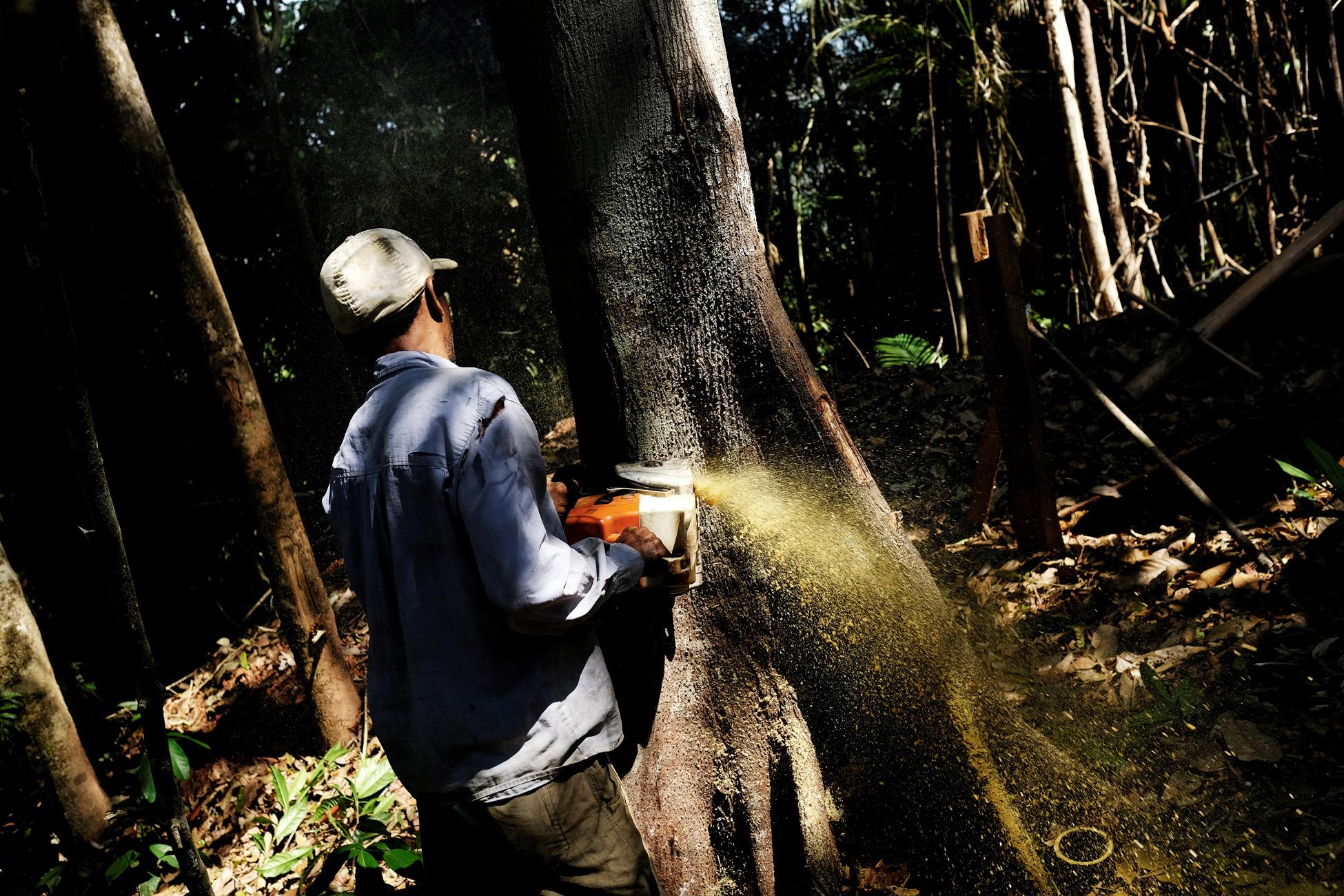 Σάλος στη Βραζιλία: Ο υπουργός Περιβάλλοντος είναι ύποπτος για λαθρεμπόριο ξυλείας