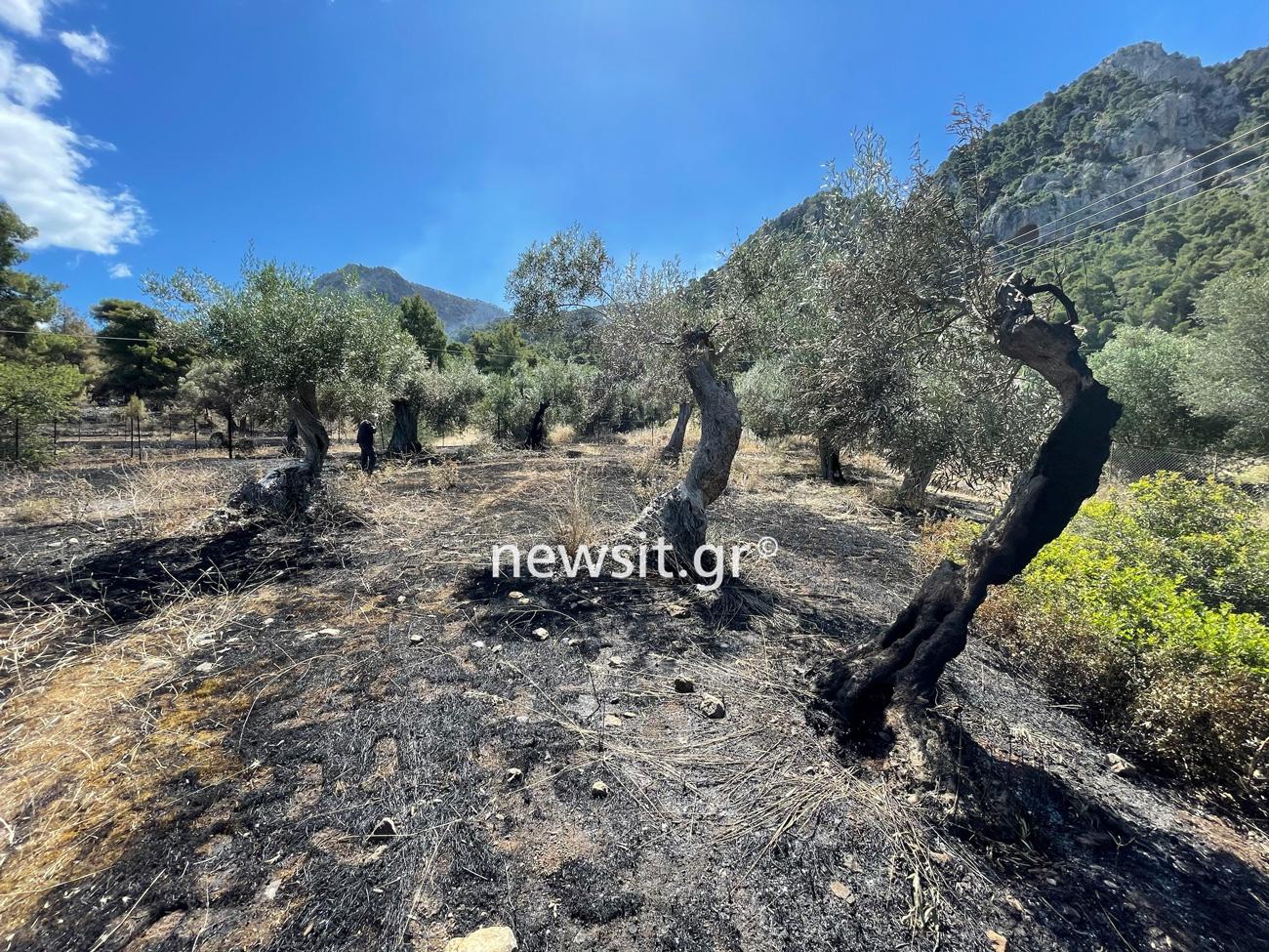 Θεσσαλονίκη: Φοιτητές προχώρησαν ένα βήμα μπροστά – Το σύστημα έγκαιρου εντοπισμού πυρκαγιάς