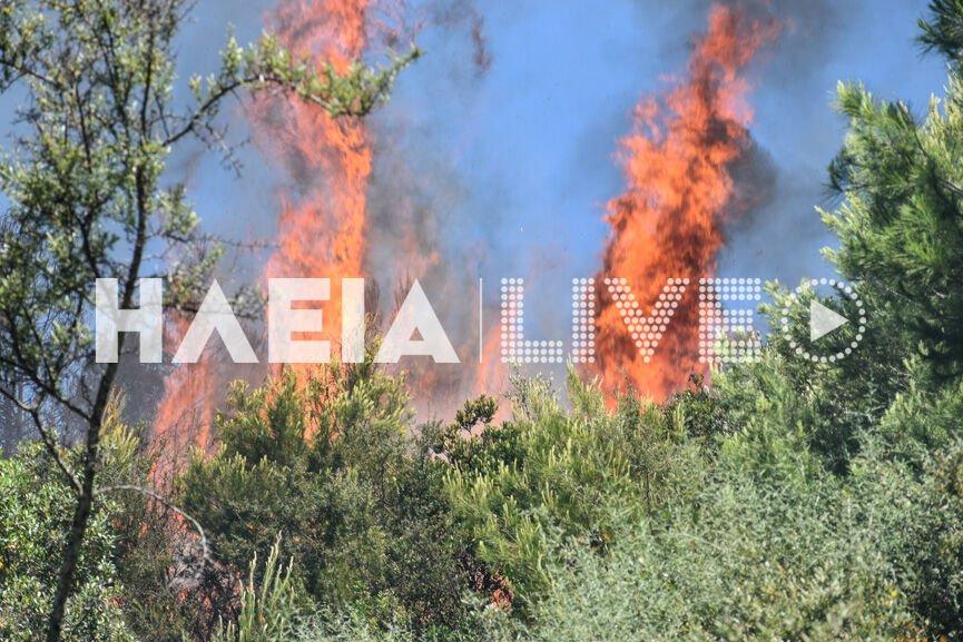 Ηλεία: Μεγάλη φωτιά σε δάσος – Μάχη της Πυροσβεστικής για να μην ξεφύγει το πύρινο μέτωπο (pics)