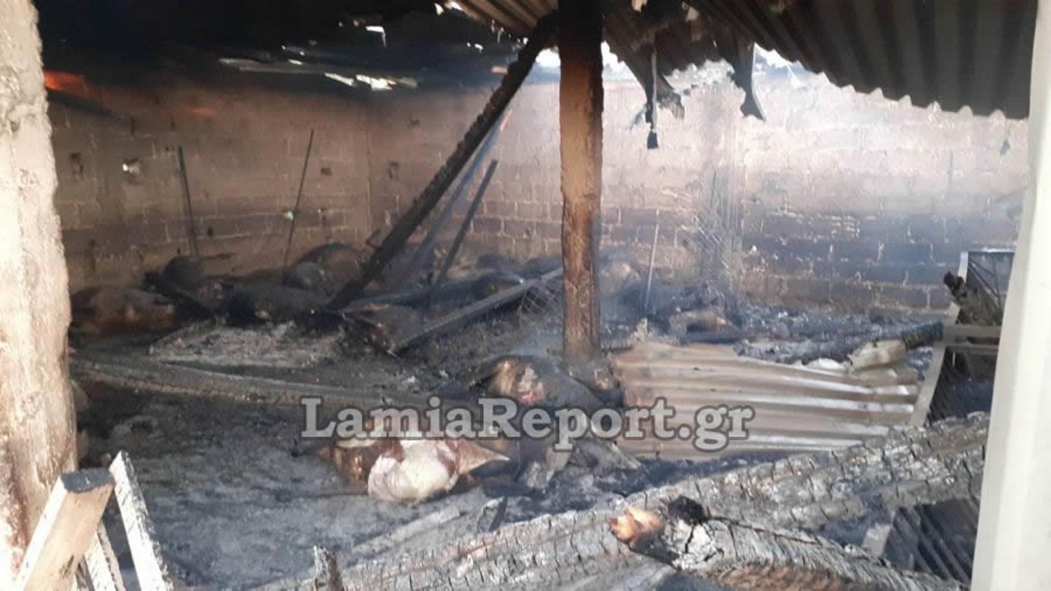 Φωτιά σε στάνη στη Λοκρίδα (pics)