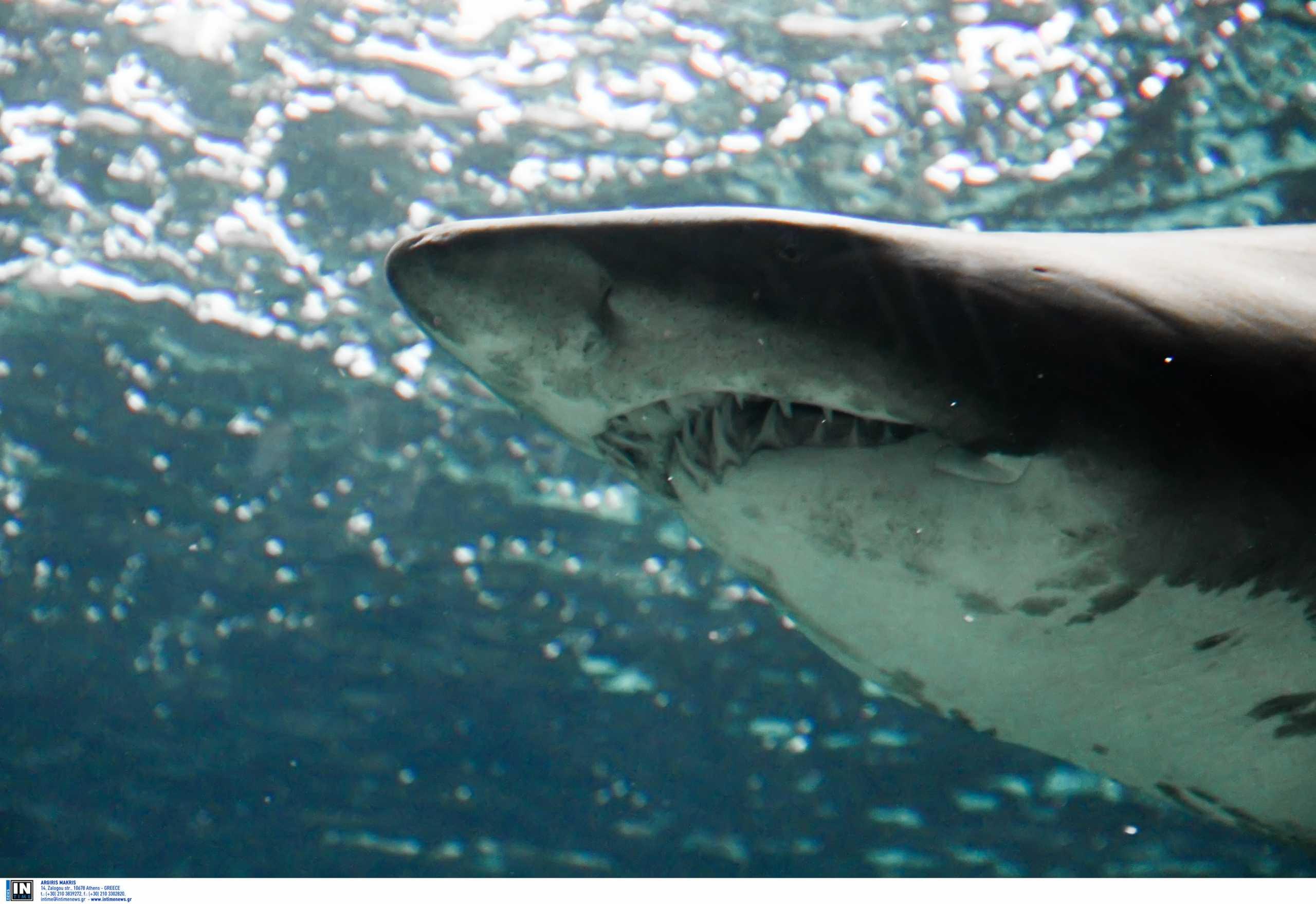 Κρήτη: Καρχαρίες βρέθηκαν νεκροί στο διάσημο ενυδρείο – Η έρευνα ειδικών για τα όσα έγιναν (pics)