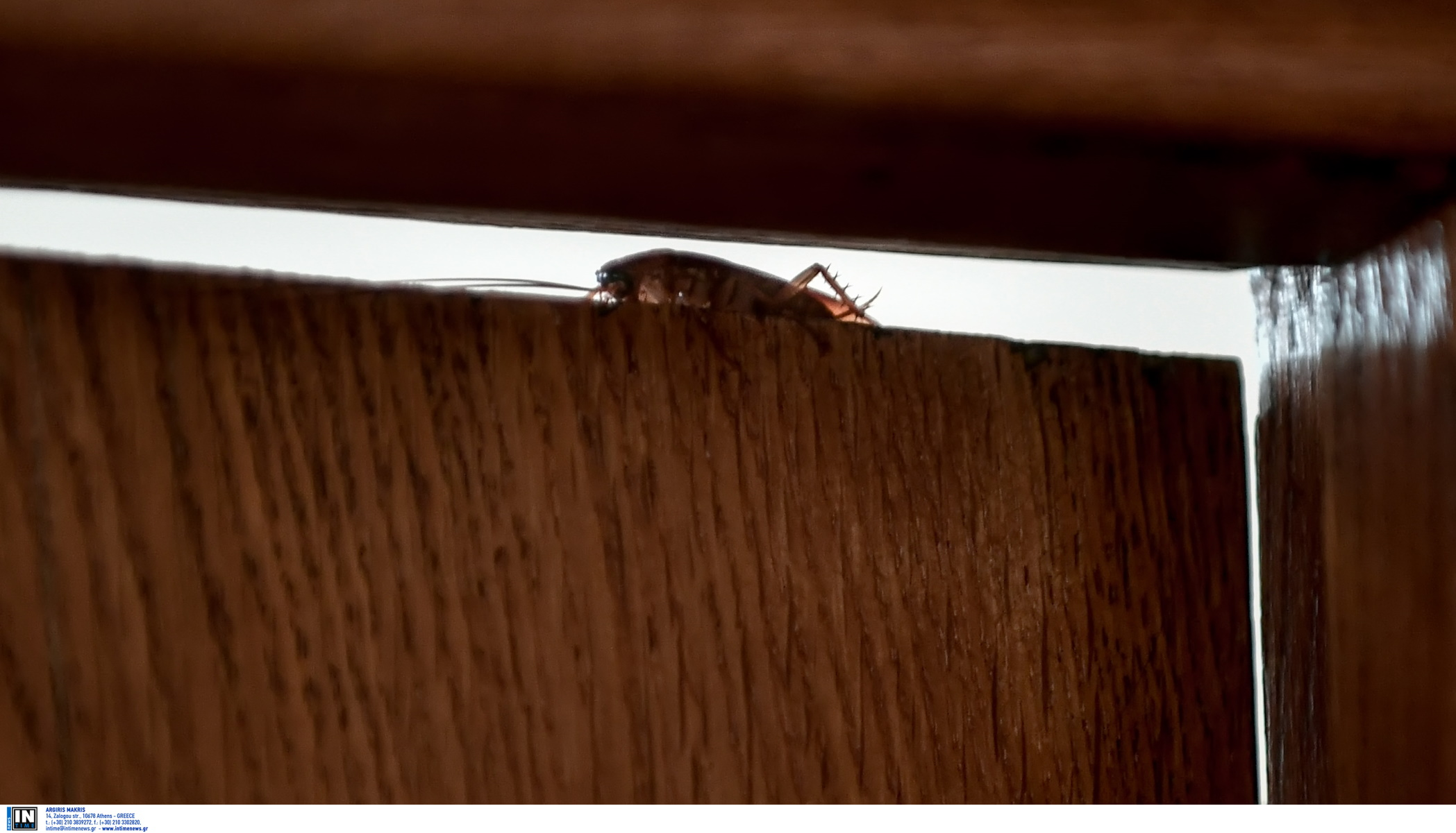Κατσαρίδες: Άσθμα και αλλεργική ρινίτιδα από τις μικρές «Τερέζες»