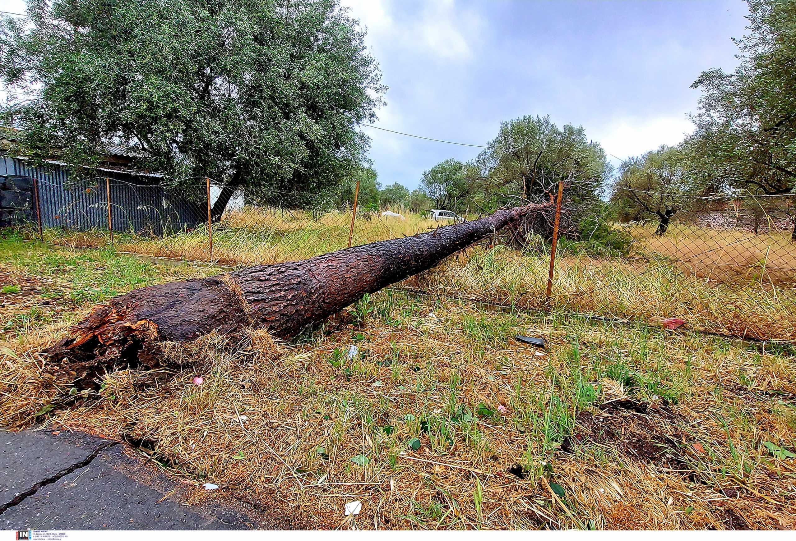Λέσβος: Ισχυροι άνεμοι «σαρώνουν» το νησί – Ζημιές σε σπίτια, κλειστά τα σχολεία