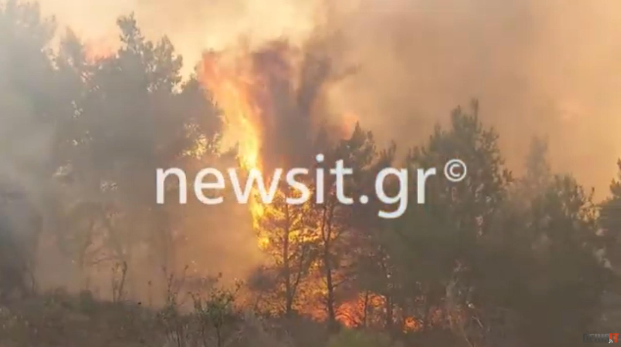 Φωτιά στα Μέγαρα: «Μάχη» με τις συνεχείς αναζωπυρώσεις