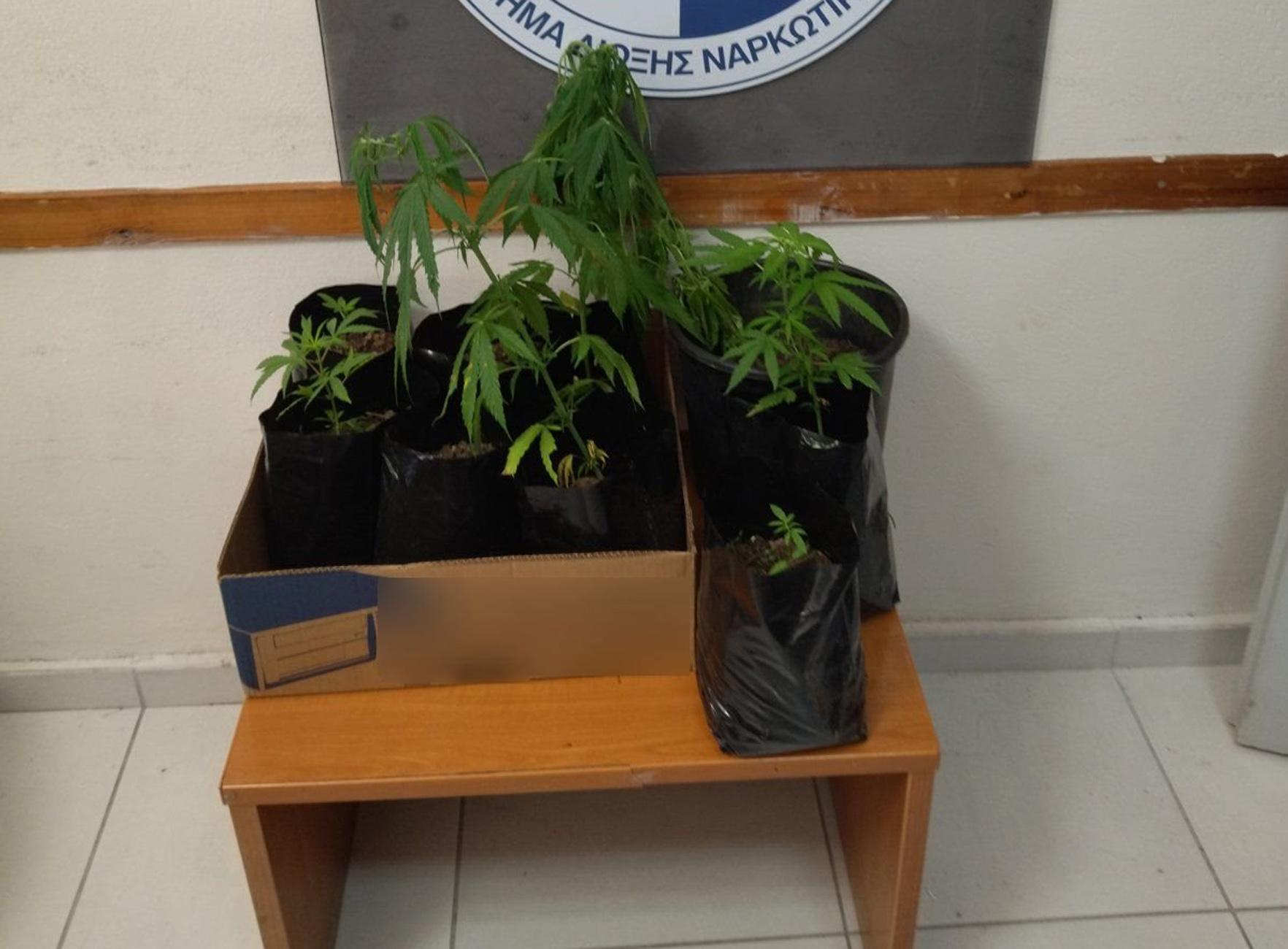 Είχαν πλημμυρίσει με χασίς και κοκαΐνη Θεσπρωτία και Πρέβεζα – 8 συλλήψεις
