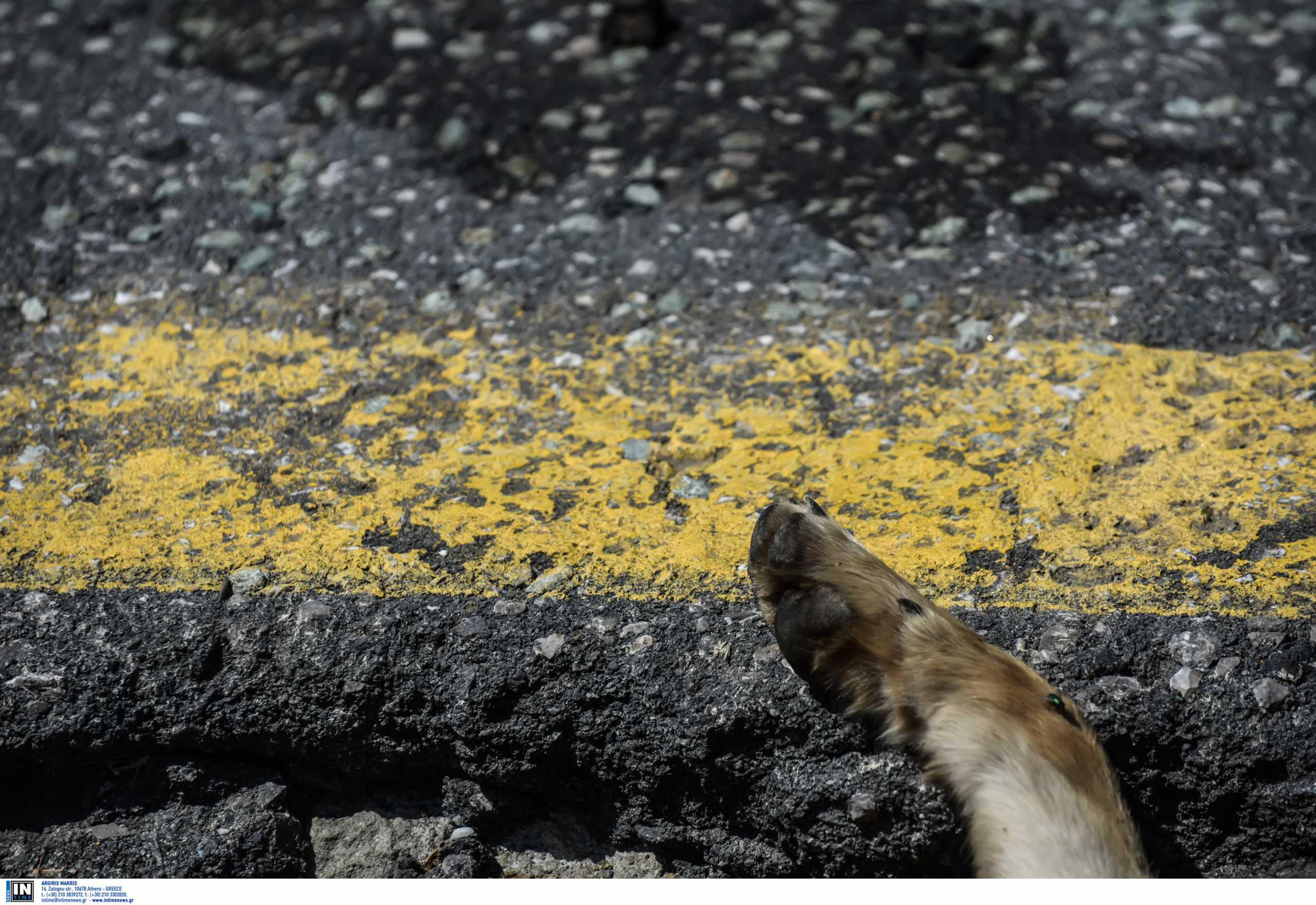 Φρίκη στο Πήλιο: Πυροβόλησαν εξ επαφής σκύλο στο στόμα