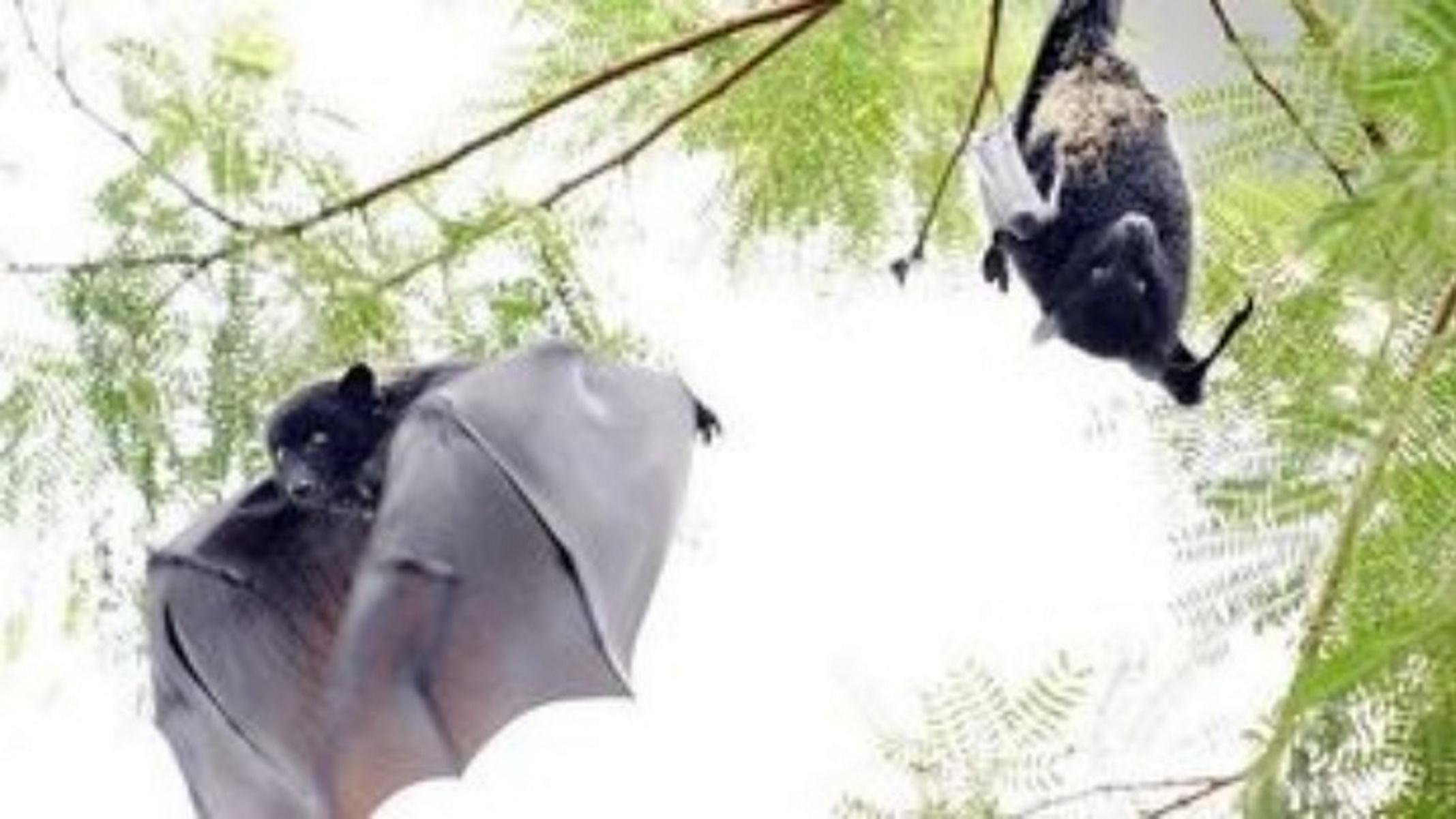 Πάτρα: Νυχτερίδα μπήκε από ανοιχτό παράθυρο και τρομοκράτησε τον οδηγό