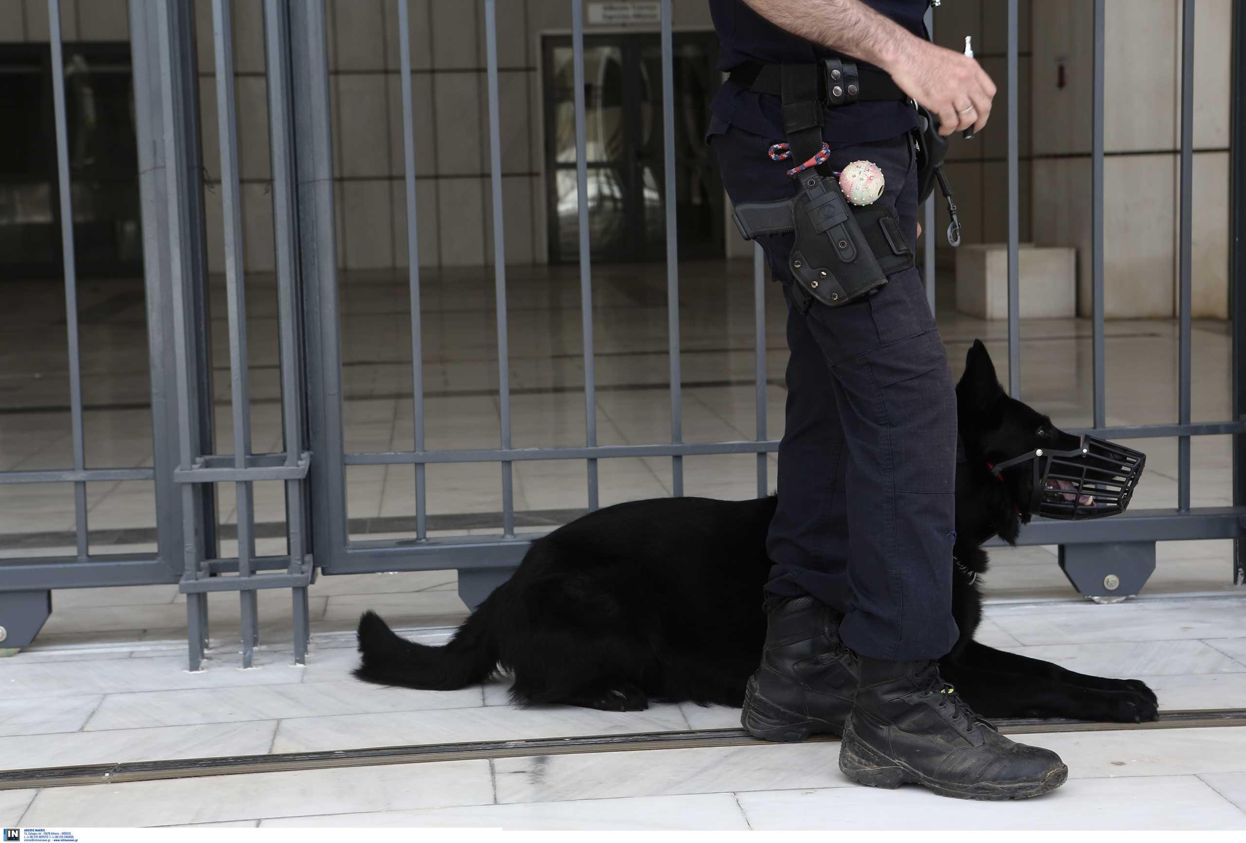 Κορονοϊός: Εκπαιδευμένοι σκύλοι μυρίζουν… άπλυτες κάλτσες και εντοπίζουν όσους έχουν μολυνθεί!