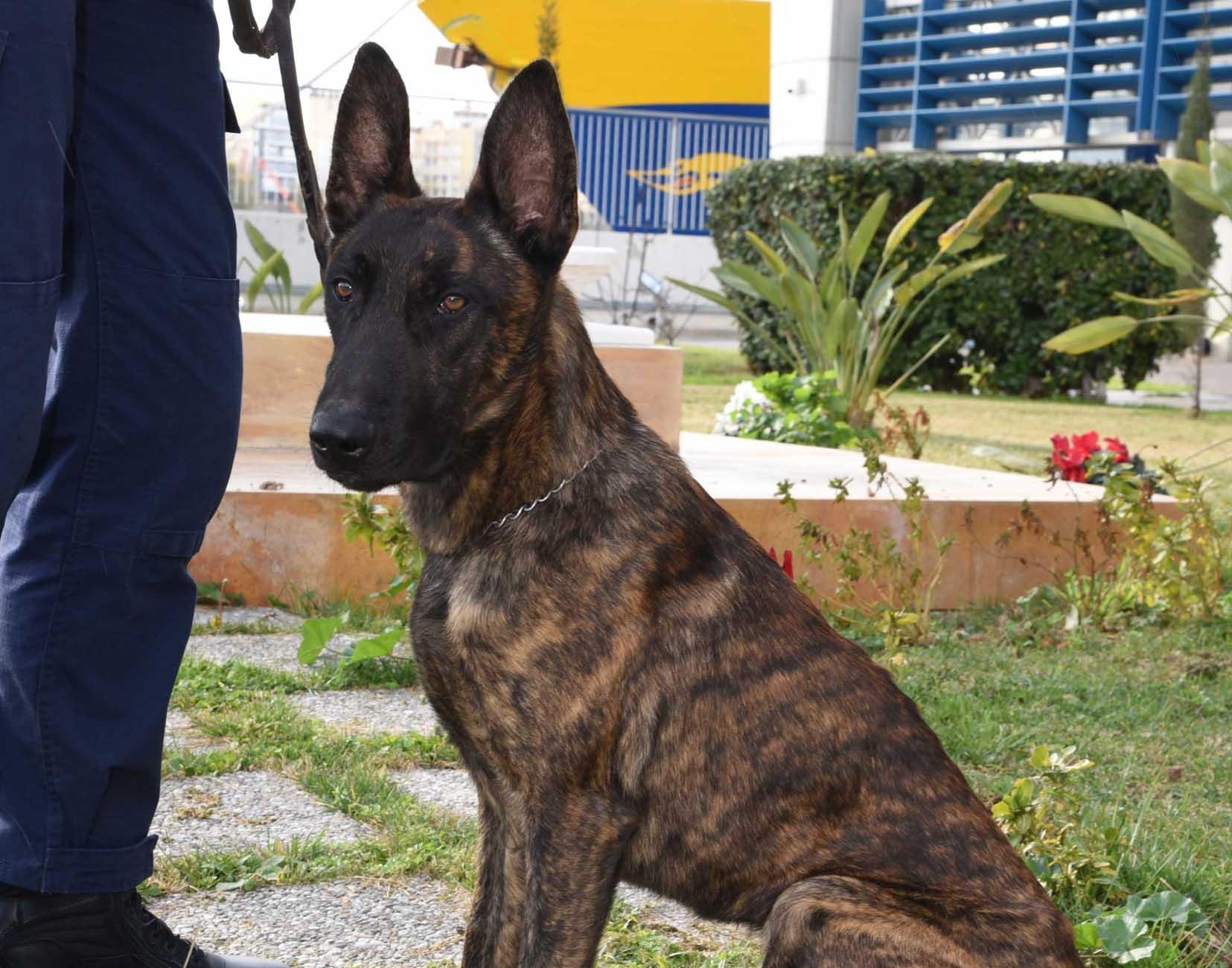 Σκύλοι ανιχνευτές «μυρίστηκαν» παράνομες μεταφορές 170.000 ευρώ