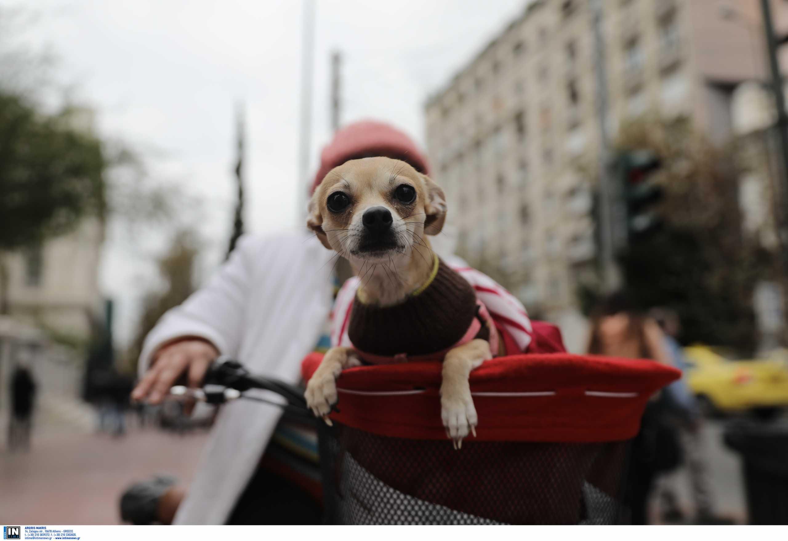 Ζώα συντροφιάς: Σε δημόσια διαβούλευση το νομοσχέδιο του υπουργείου Εσωτερικών
