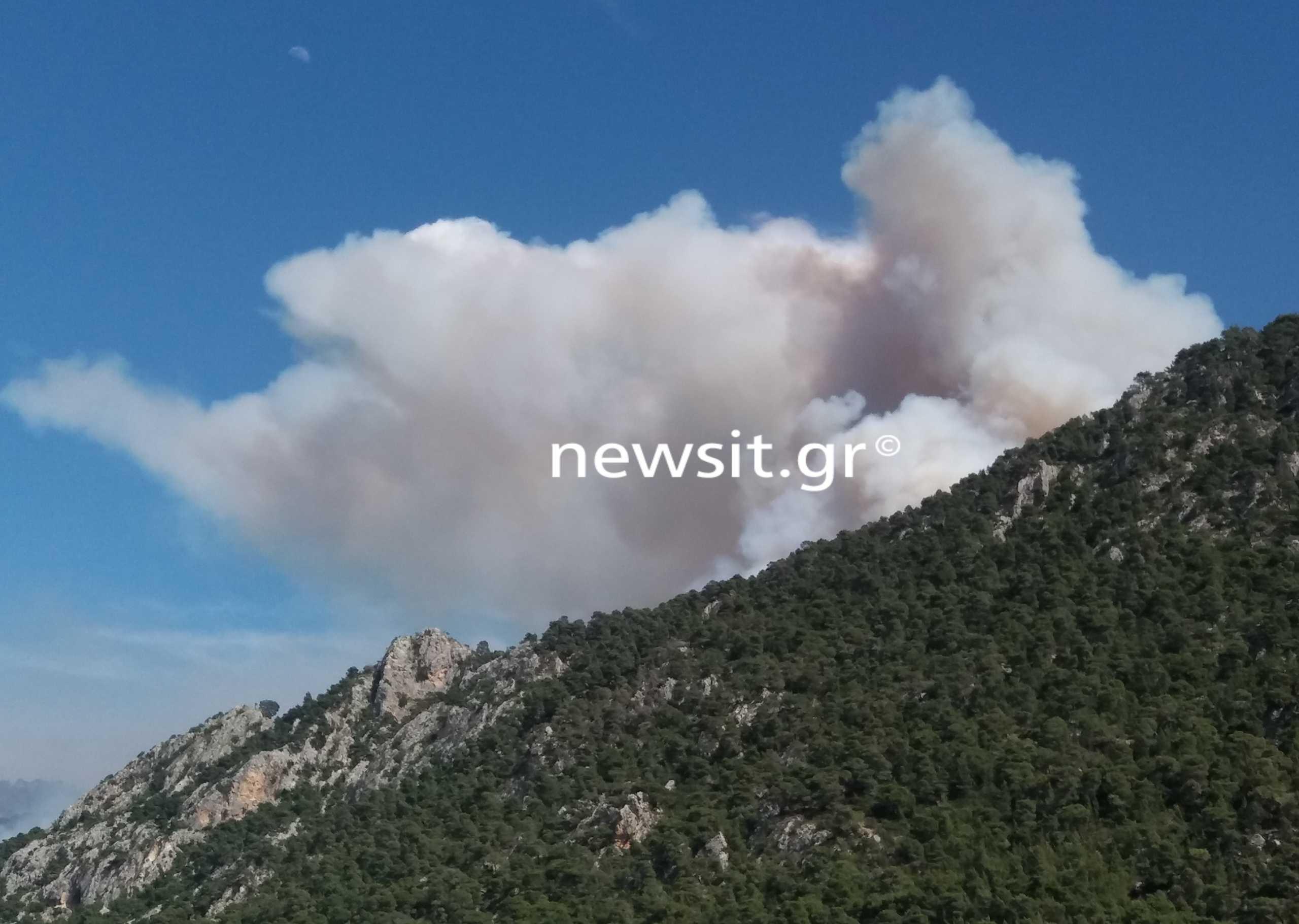 Φωτιά στο Σχίνο: Νέα αναζωπύρωση – Ισχυροί άνεμοι στην περιοχή (pics)