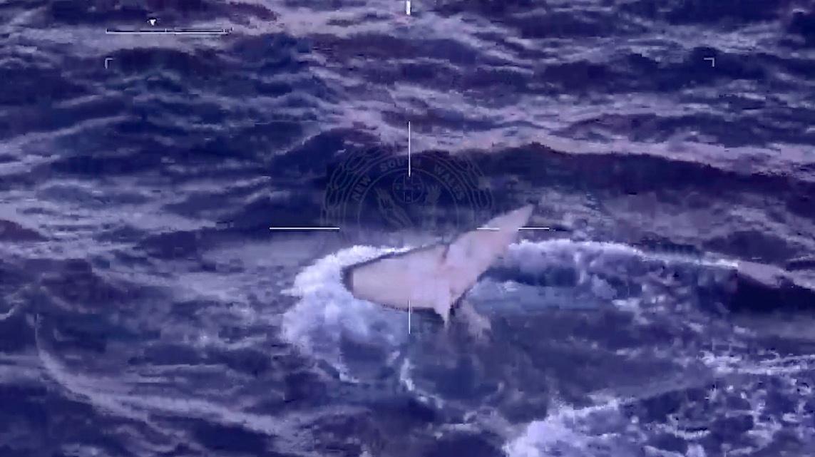Αυστραλία: Περιπετειώδης απελευθέρωση φάλαινας που είχε πιαστεί σε δίχτυα (pics, vid)