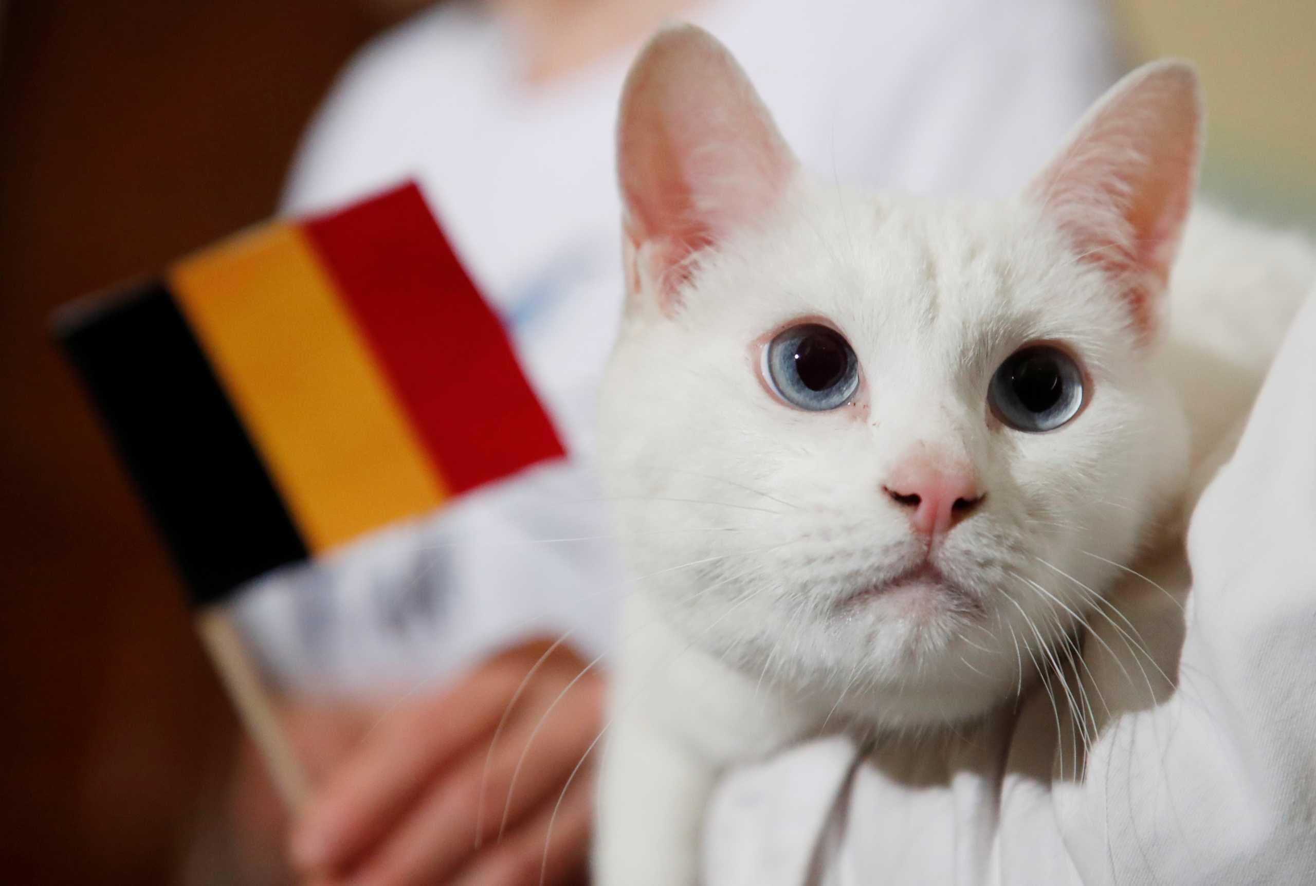 Euro 2020: Ο κουφός γάτος που προβλέπει τα ματς επέστρεψε αλλά «πλήγωσε» τους Ρώσους