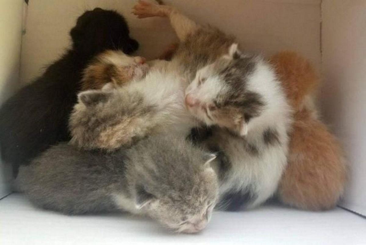 Λαμία: Συγκινεί ο οδηγός απορριμματοφόρου που σώζει γατάκια από τα σκουπίδια