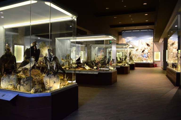 «Χρυσό» το Μουσείο Φυσικής Ιστορίας Μετεώρων και Μουσείο Μανιταριών