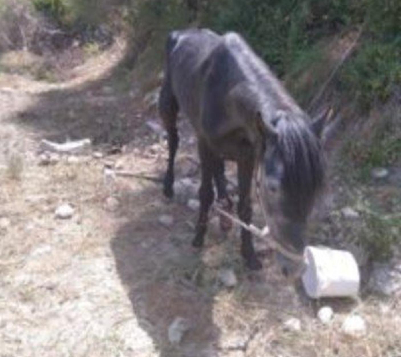 Ηράκλειο: «Μάγκας» βασάνιζε το άλογό του και του έκοψε το πόδι!