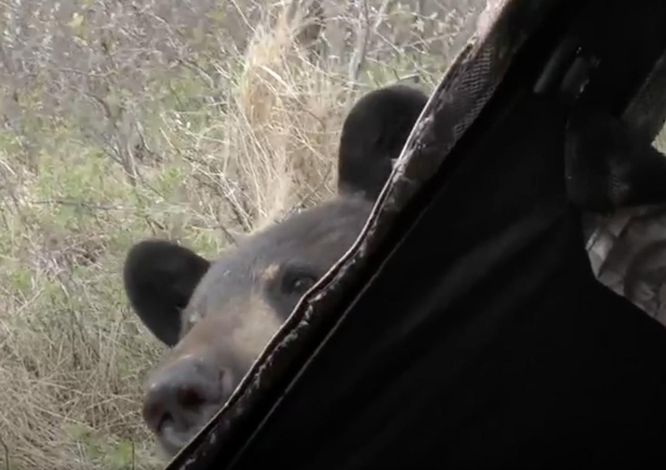 Η απρόσμενη κατάληξη της συνάντησης με μία αρκούδα
