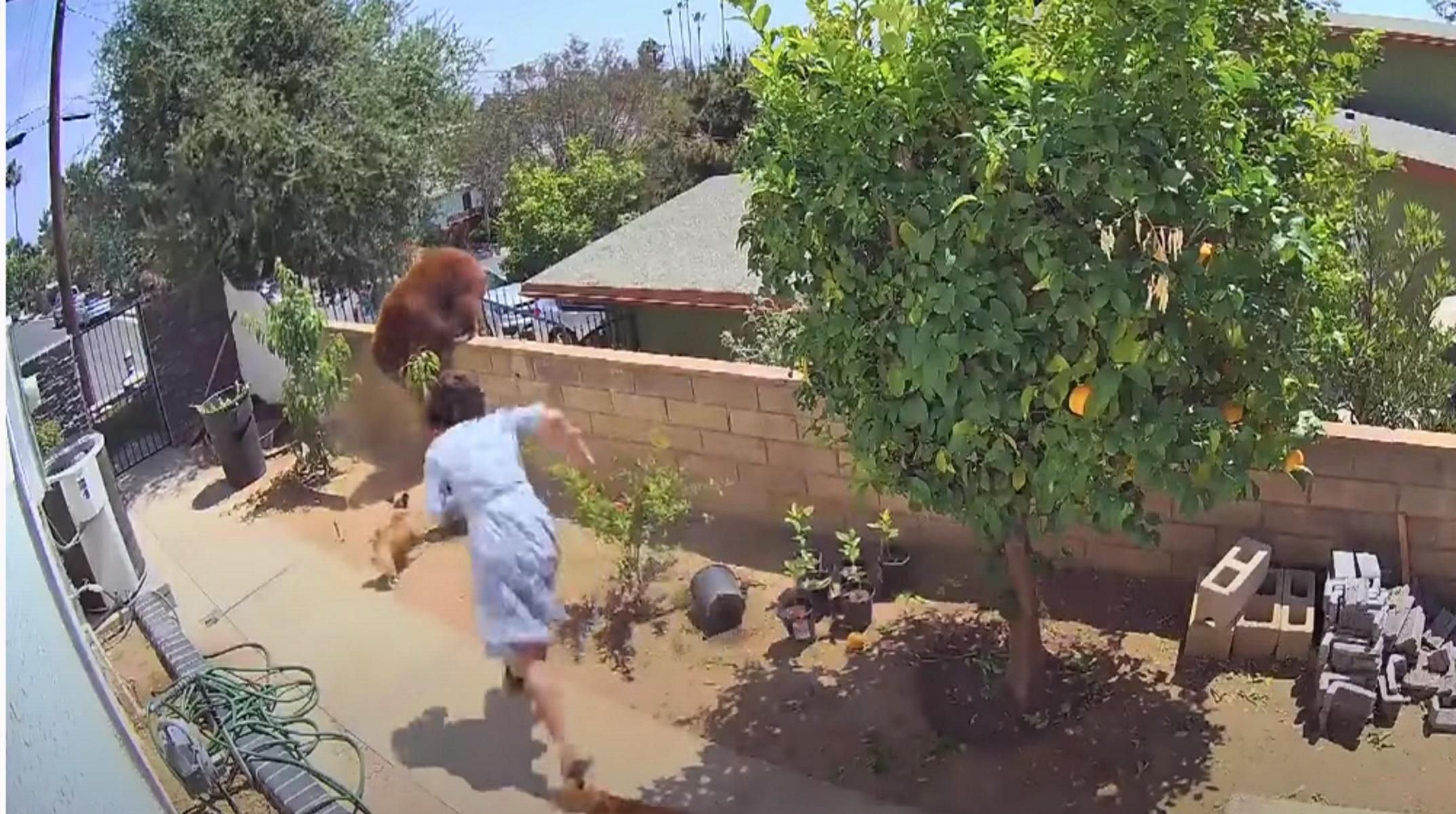 Καλιφόρνια: Πάλεψε με τεράστια αρκούδα για να σώσει τα σκυλιά της – Βίντεο που σοκάρει