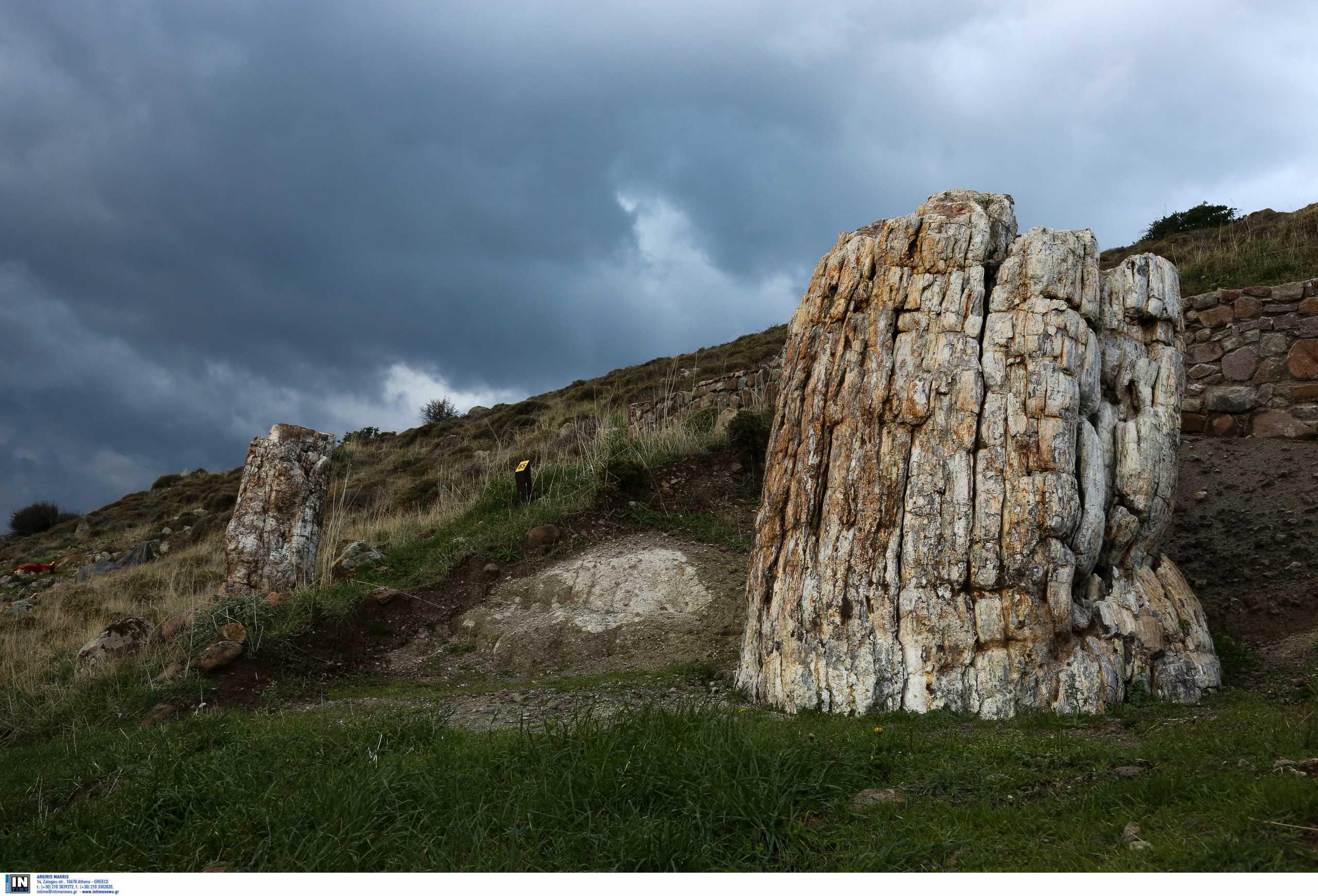 Λέσβος: Εικονική περιήγηση στο απολιθωμένο δάσος – Τα μοναδικής επιστημονικής αξίας ευρήματα