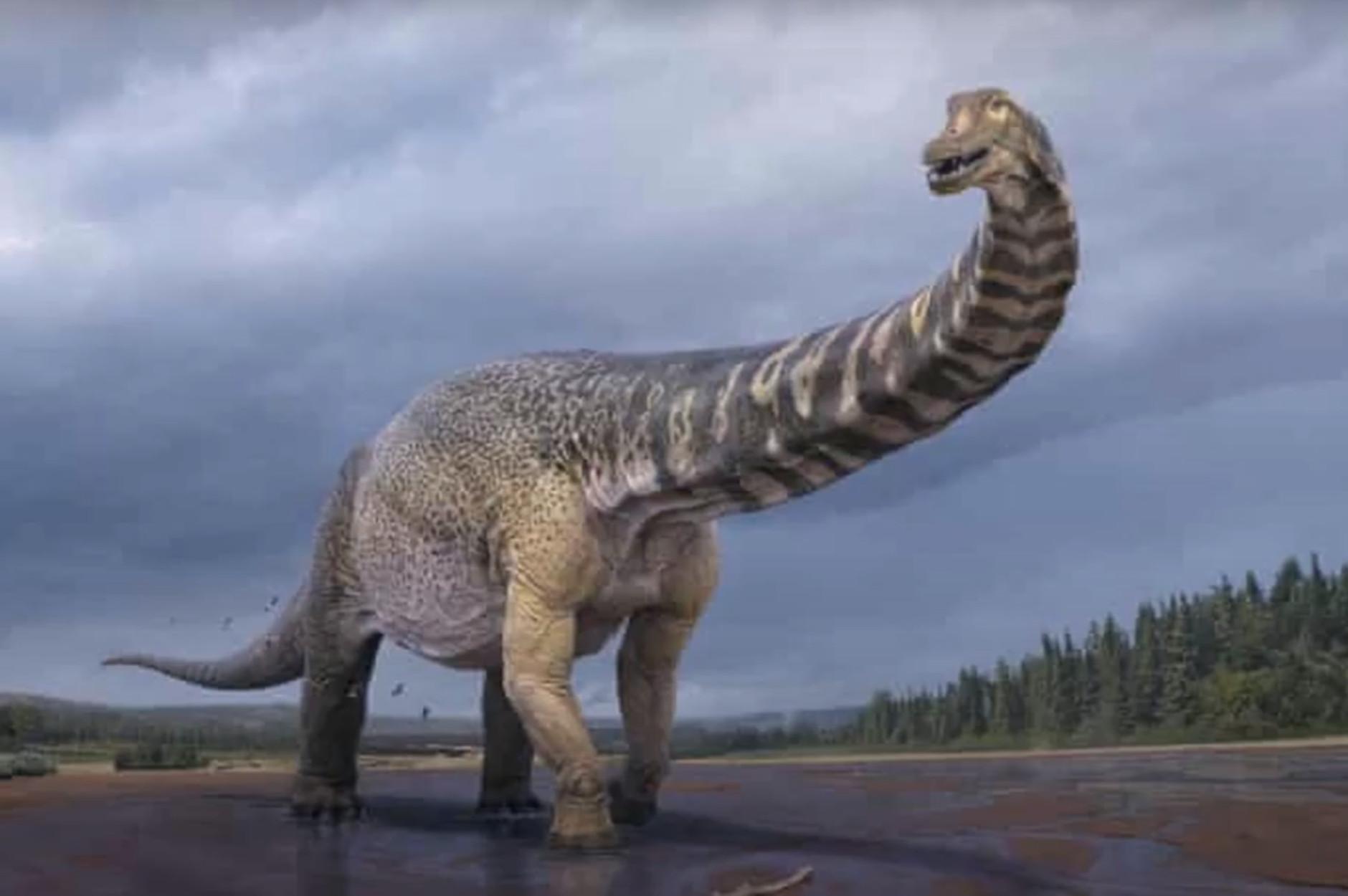 Ανακαλύφθηκε νέος δεινόσαυρος στην Αυστραλία! Είχε μήκος γηπέδου μπάσκετ και ύψος 2 ορόφων (video)