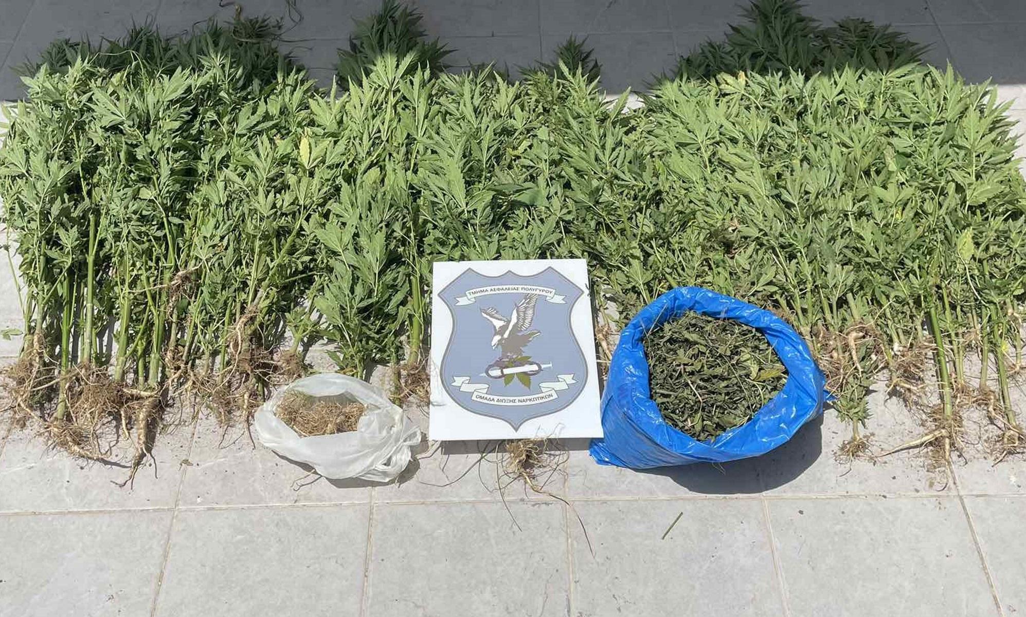 Θεσσαλονίκη: 17χρονος καλλιεργούσε κάνναβη κοντά στο σπίτι του (pic, vid)