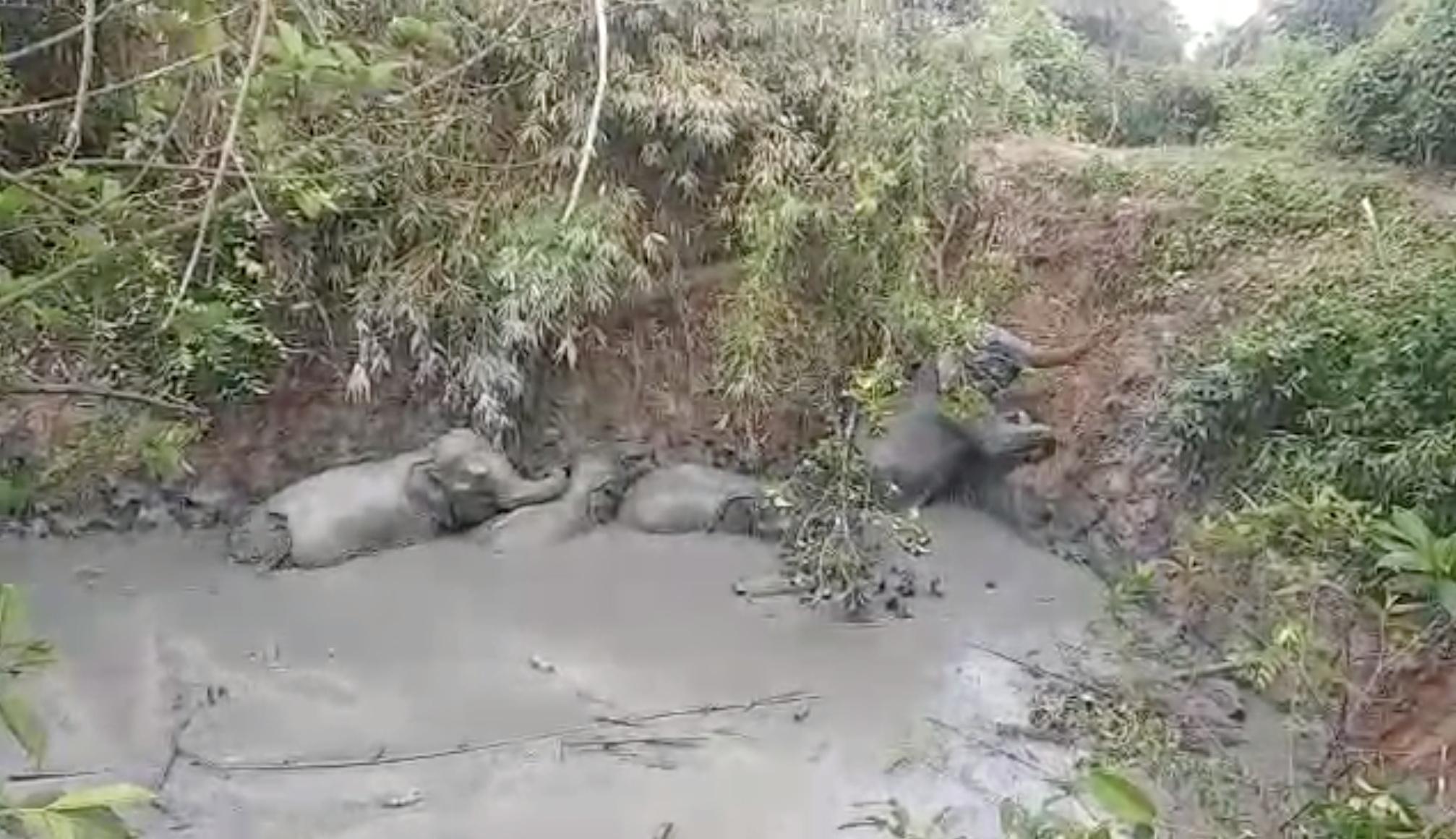 Οι ελέφαντες πάνε εκδρομή και η νοτιοδυτική Κίνα είναι σε πανικό (video)