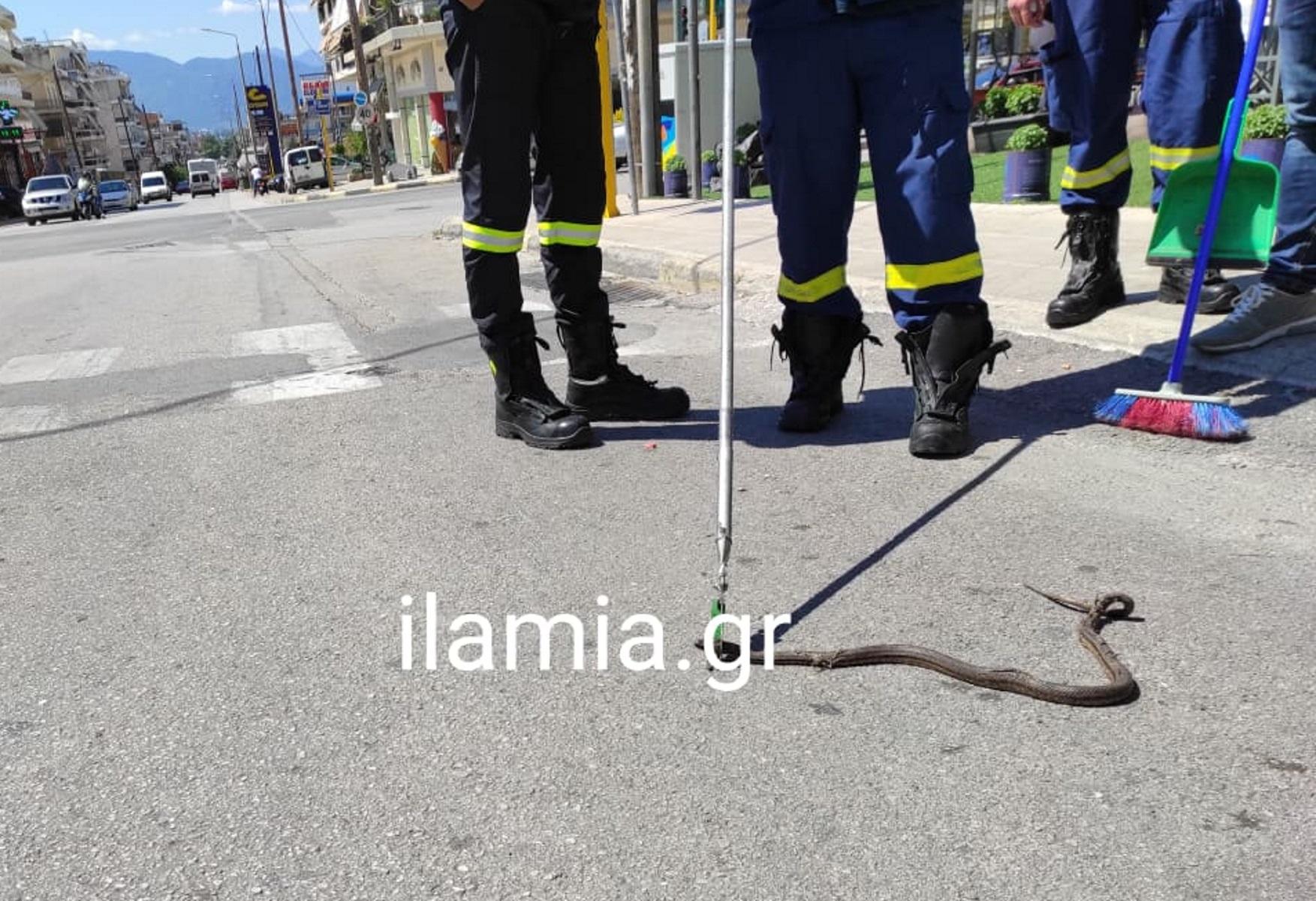 Λαμία: Φίδι αναστάτωσε θαμώνες καφετέριας και οδηγούς (pics)