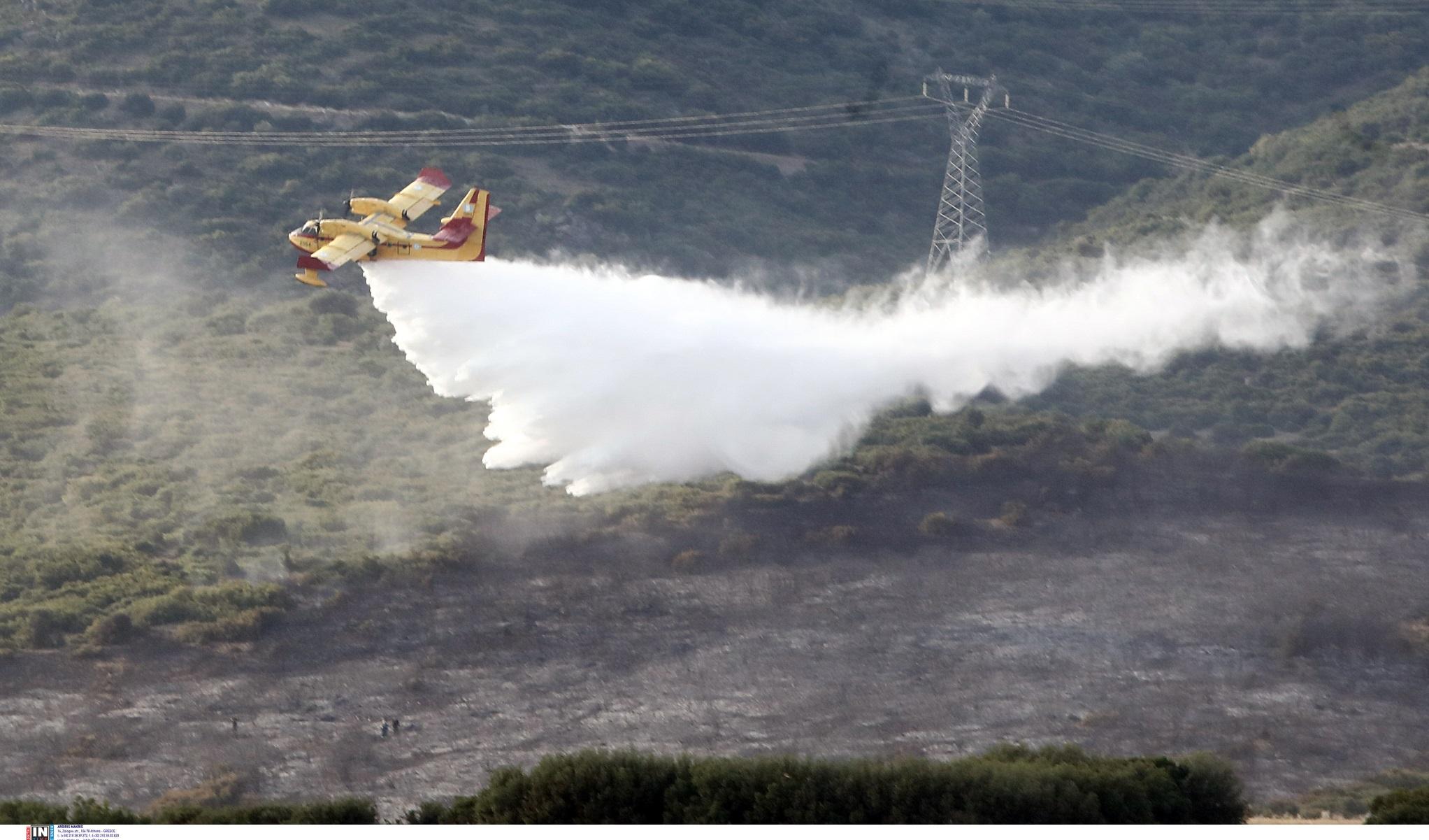 Λαμία: Φωτιά σε δασική έκταση στην Καμηλόβρυση