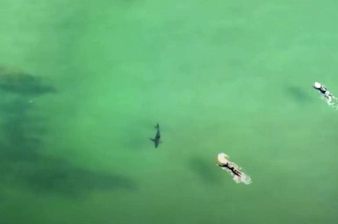 Τα στιγμιότυπα που «σβήνουν» τον φόβο για τους καρχαρίες