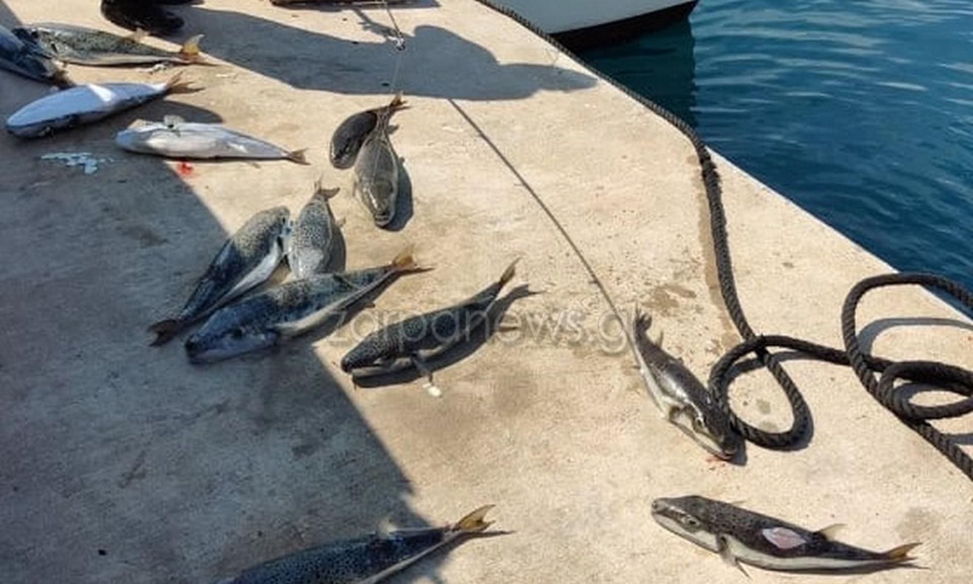 Χανιά: Δηλητηριώδεις λαγοκέφαλοι στις ακτές – Γέμισαν τα δίχτυα των ψαράδων (pics)