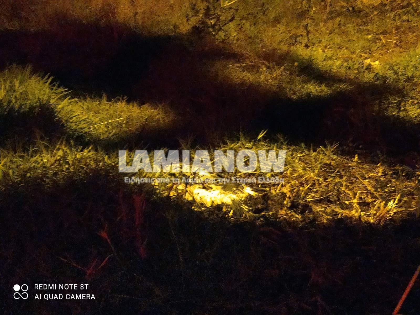 Λαμία: Κάηκαν ζωντανοί δύο μικροί πελαργοί (pics, video)