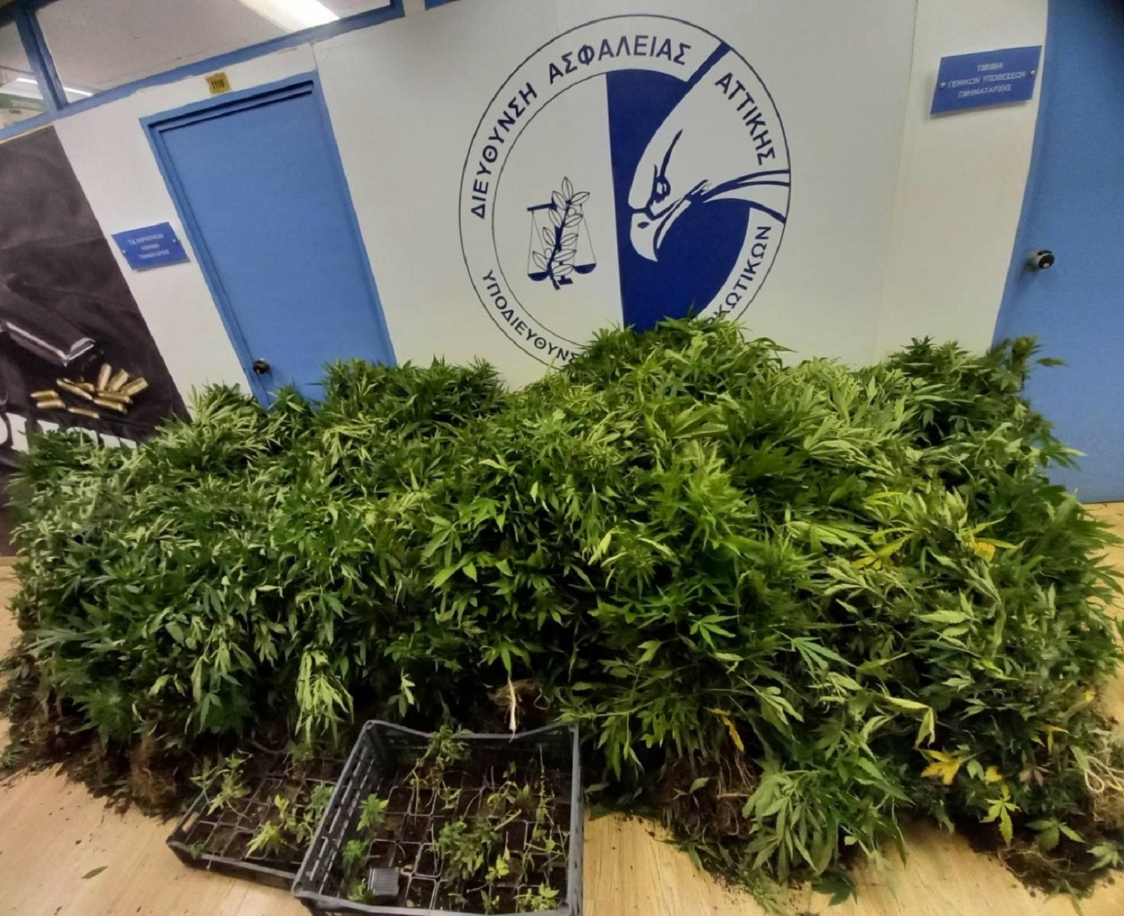 Φυτεία με 1600 δενδρύλλια κάνναβης στον Κάλαμο – 4 συλλήψεις