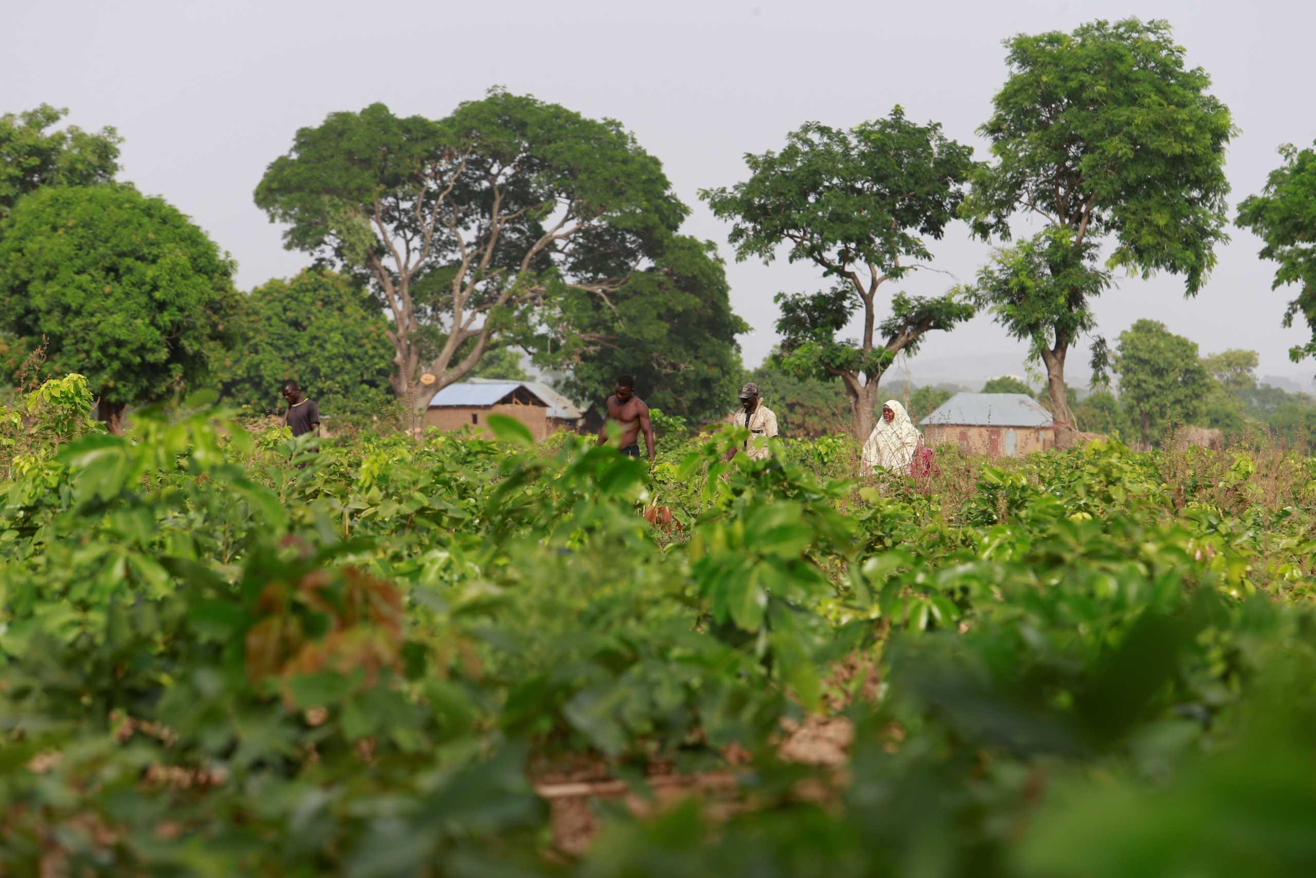 Νιγηρία: 66 νεκροί από ζωοκλέφτες σε επτά χωριά