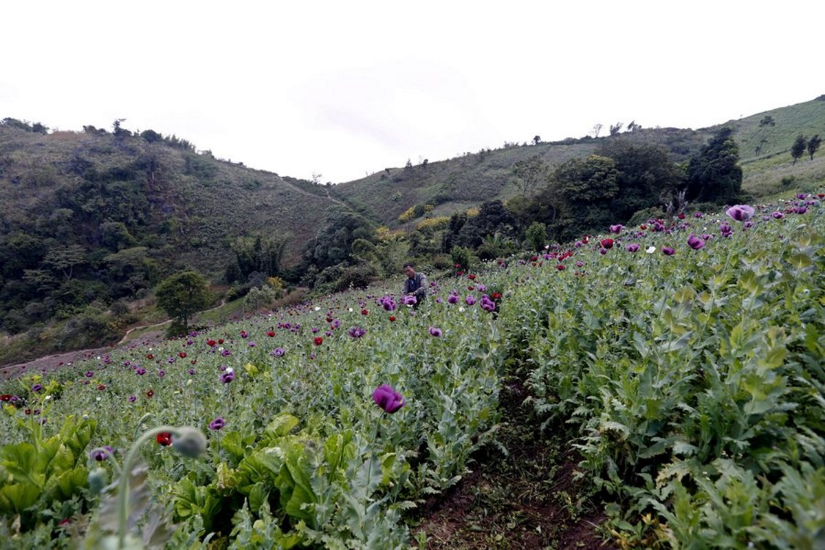 «Καμπανάκι» ΟΗΕ: Αισθητός «για χρόνια» ο αντίκτυπος της πανδημίας στην παραγωγή ναρκωτικών