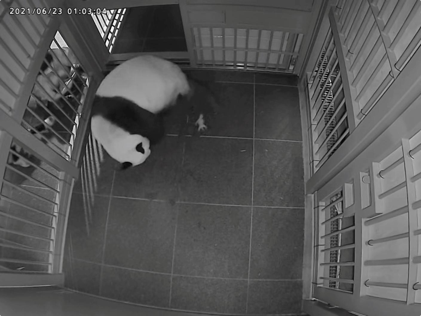 Τόκιο: Η πρώτη γέννηση πάντα σε ζωολογικό κήπο εδώ και 4 χρόνια! (pics)