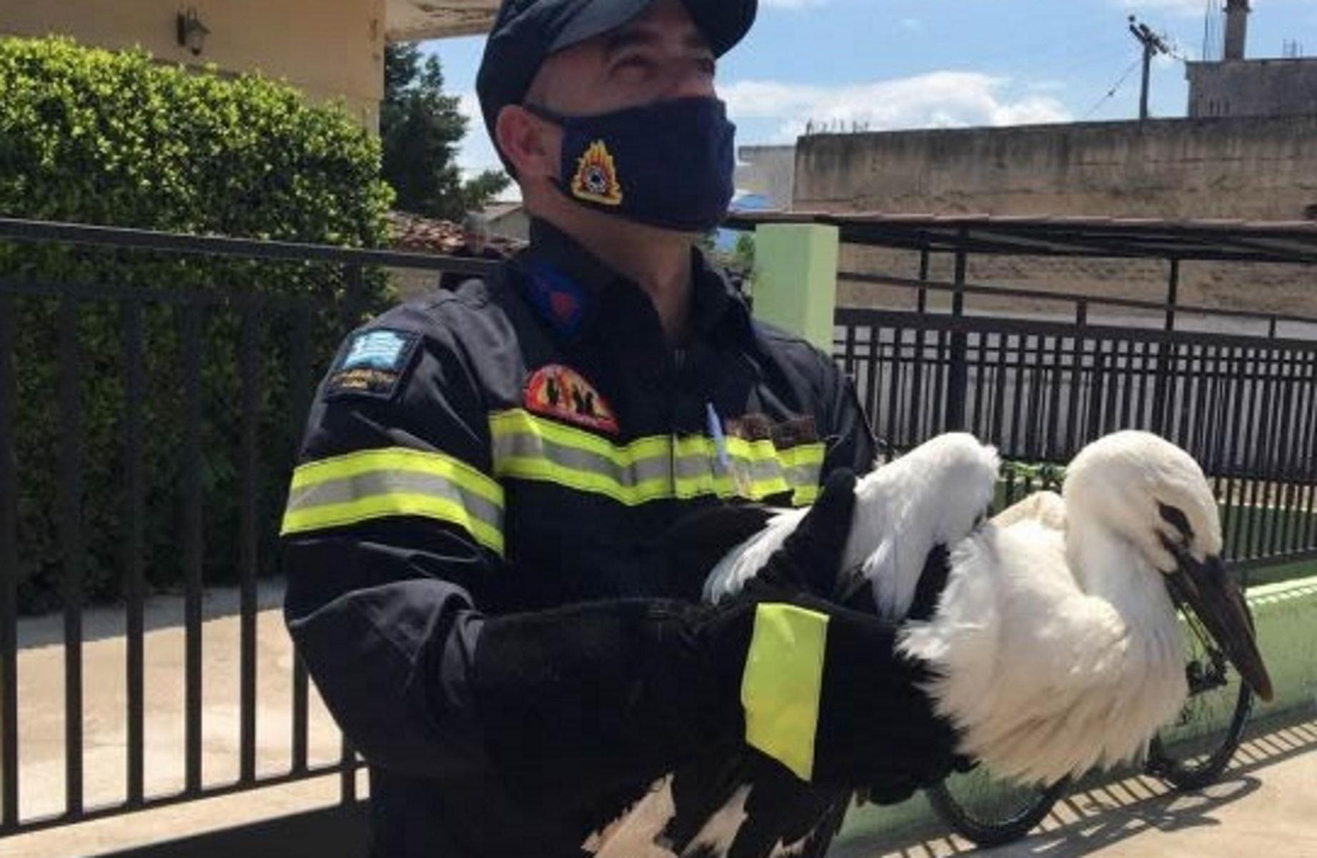 Λαμία: Έτσι σώθηκε ο πελαργός που έπεσε από τη φωλιά του (video)