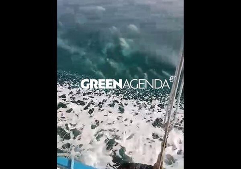 Λήμνος: Οι μάζες της βλέννας που πλέουν στην επιφάνεια της θάλασσας (vid)