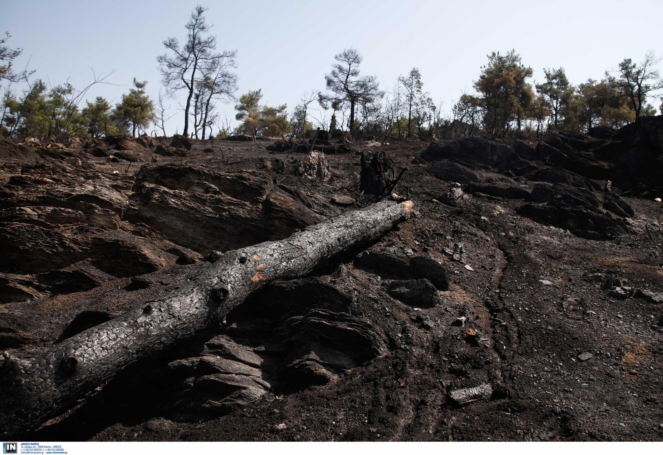 Θεσσαλονίκη: Μαύρο παντού στο Σέιχ Σου – Αυτοψία μετά τη φωτιά που κατέκαψε το δάσος