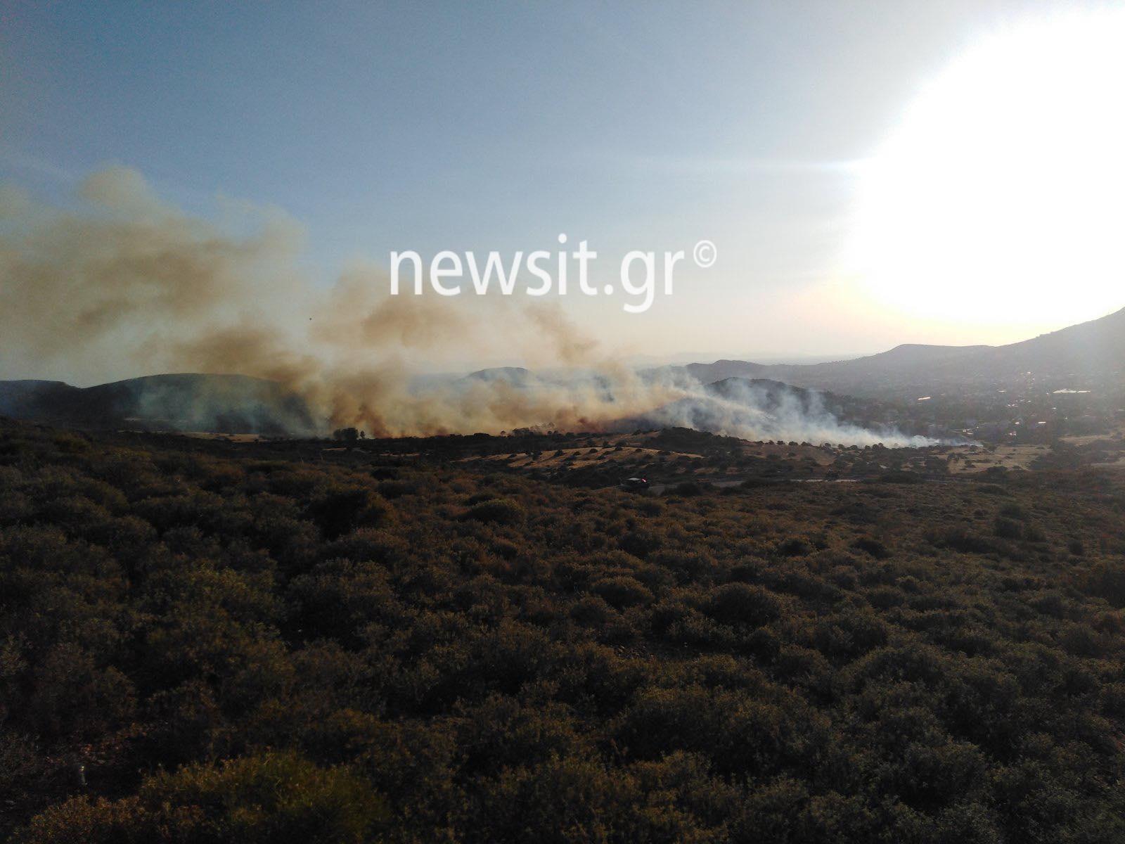 Φωτιά στην Ανάβυσσο – Συναγερμός στην Πυροσβεστική