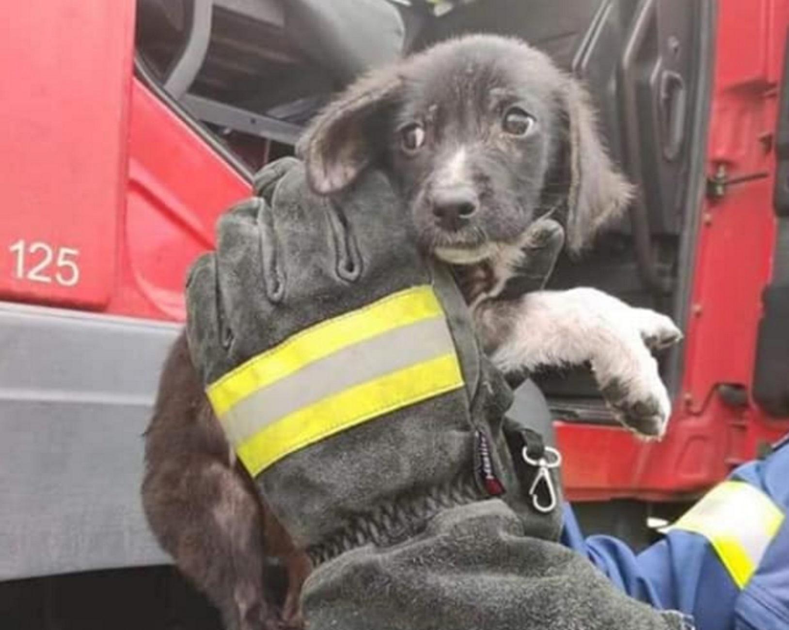 Ξάνθη: Η γλυκιά «Fire» τα κατάφερε στη φωτιά – Δείτε το κουτάβι που έγινε διάσημο σε ολόκληρη την πόλη