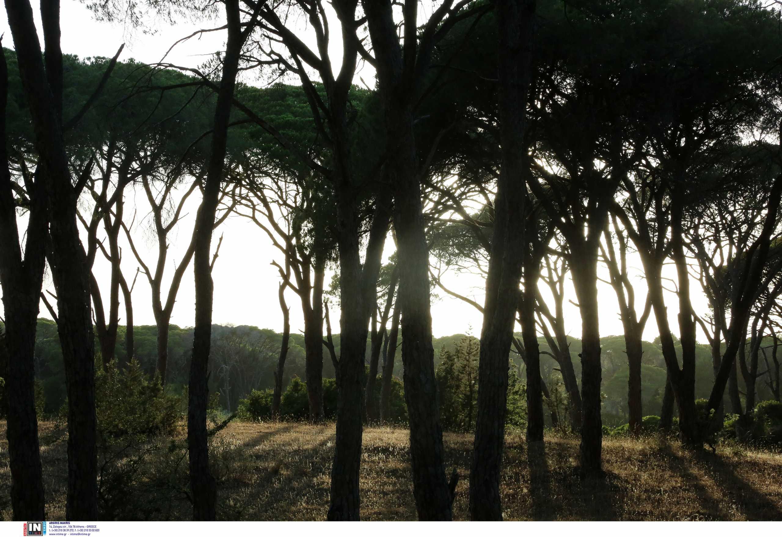 Ηλεία: Εντοπίστηκε ζωντανή κάτω από ένα δέντρο η Γερμανίδα τουρίστρια που είχε εξαφανιστεί
