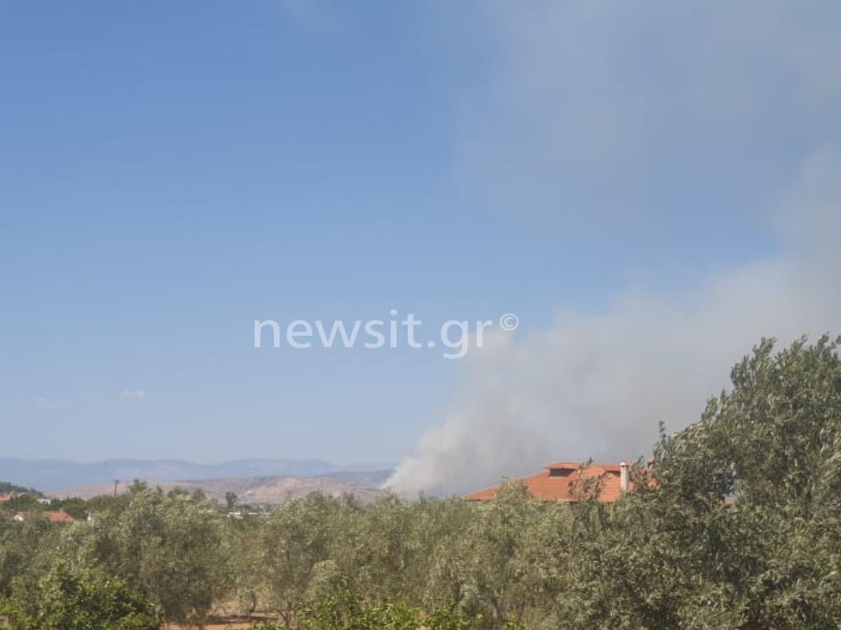 Φωτιά τώρα στη Χαλκίδα – Καίει δασική έκταση πίσω από τη ΔΕΗ