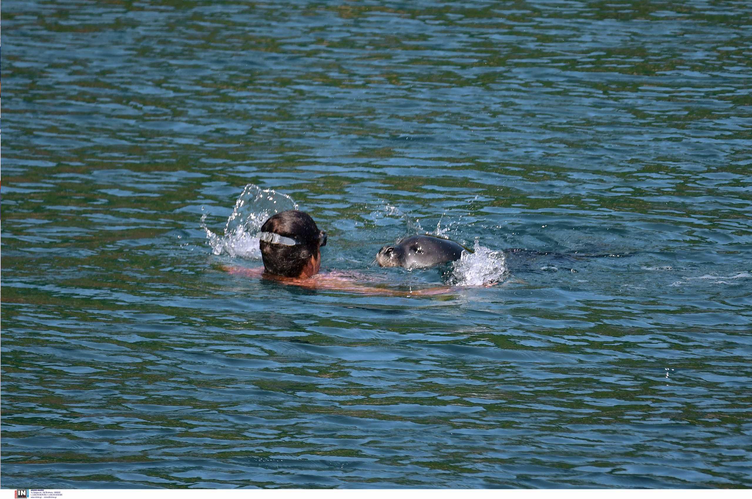 Καρέ – καρέ η επίθεση φώκιας σε τουρίστα στην Αλόννησο