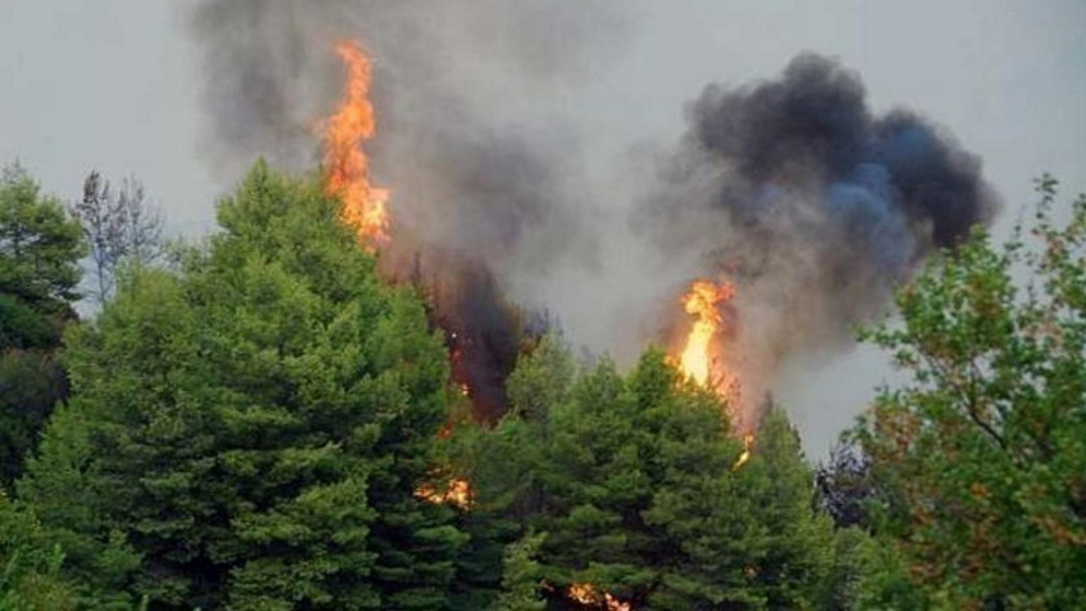 Εύβοια: Φωτιά στην περιοχή Ριτσώνα – Πυροσβέστες και εθελοντές στη μάχη με τις φλόγες
