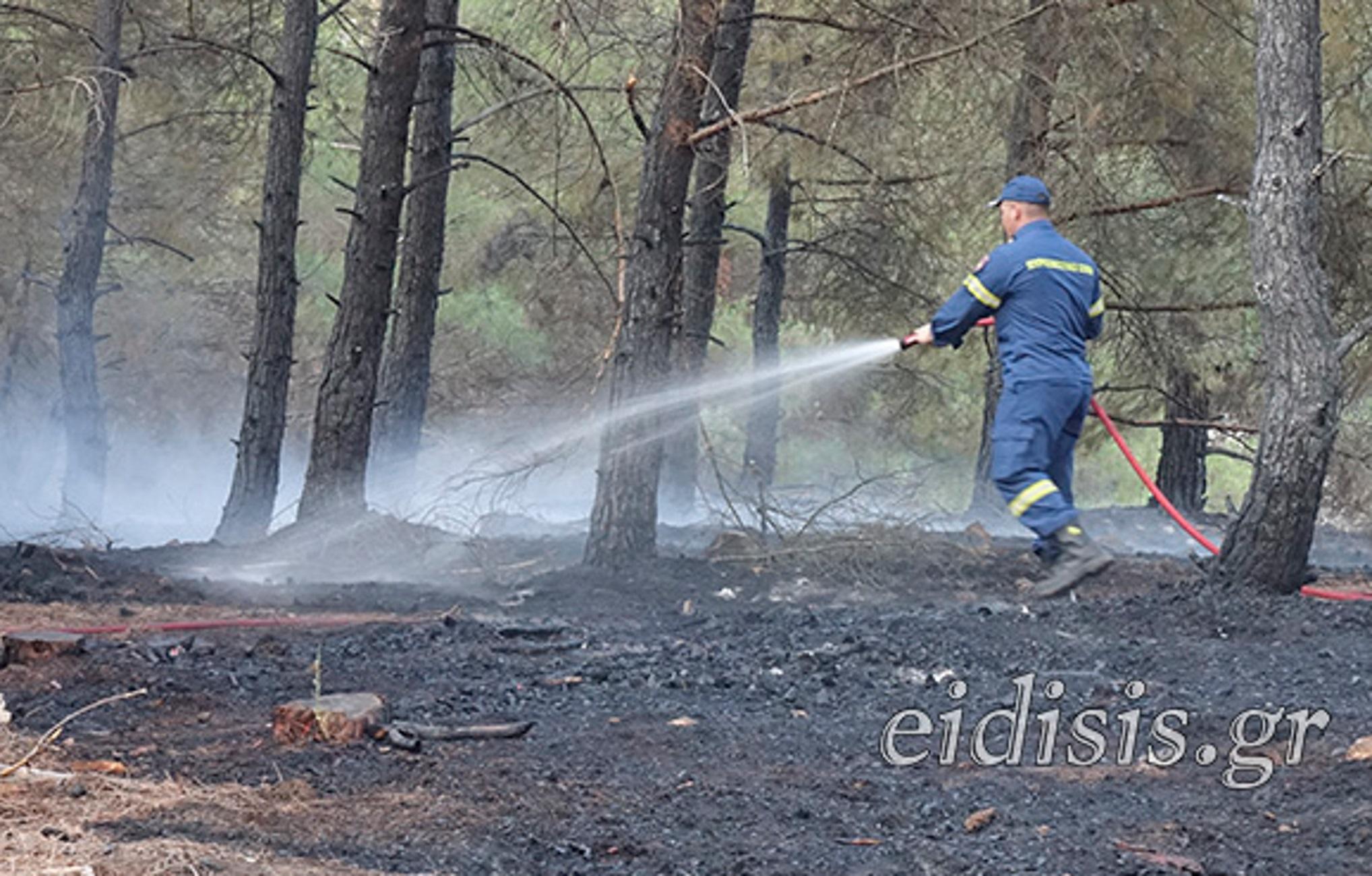 Κιλκίς: Η φωτιά και ο περιπατητής που έσωσε τον πευκόφυτο λόφο από την πλήρη καταστροφή